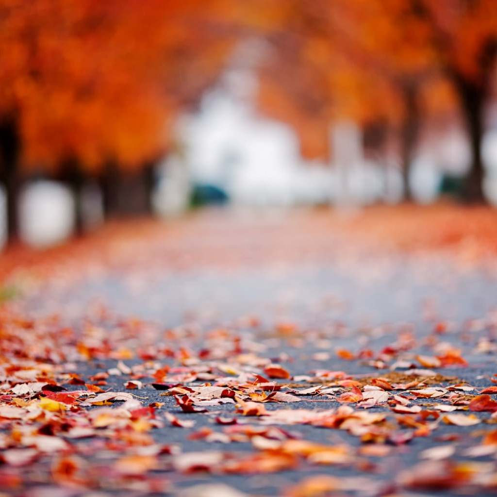 Tree Download Wallpaper Road Autumn Asphalt Leaves Macro