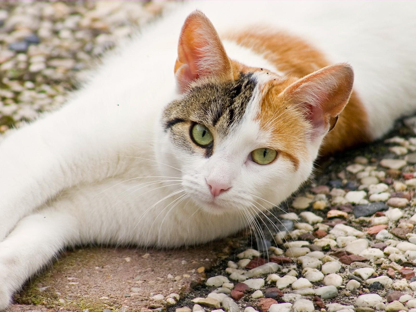 Кот на камушках  № 530484 без смс