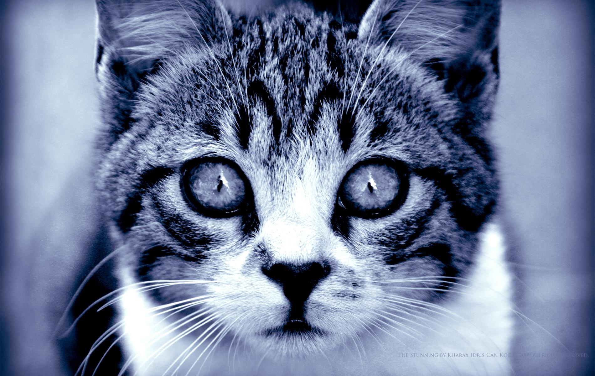 Кот взгляд испуганный  № 650744  скачать