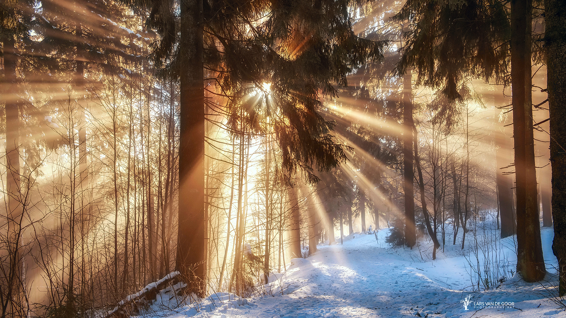зимний солнечный лес  № 310359 без смс