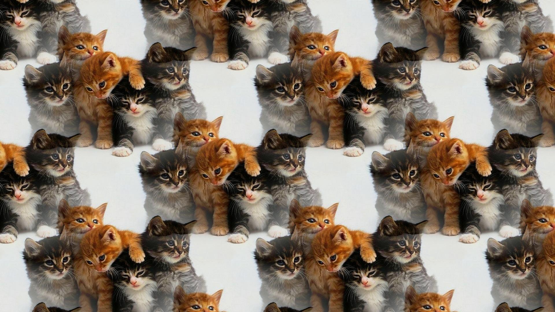 Картинки много кошек