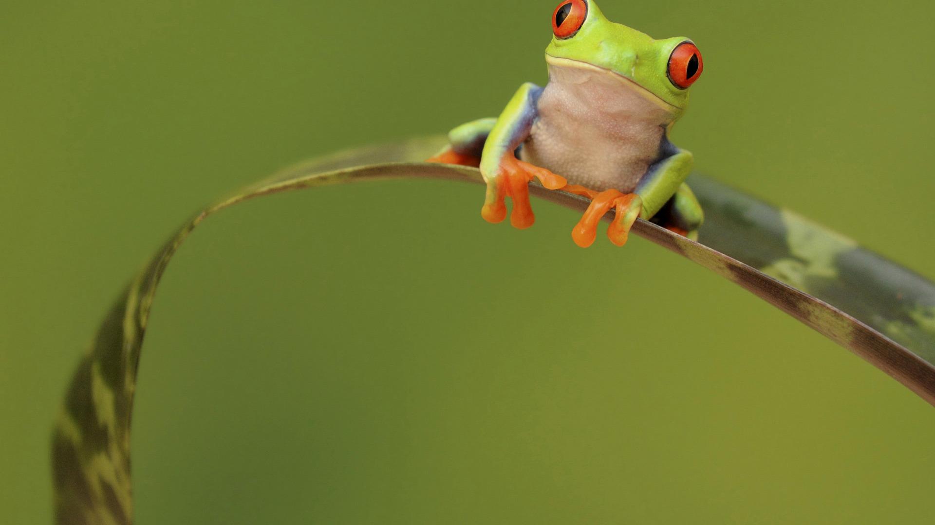 жаба лист фон  № 3164602 бесплатно
