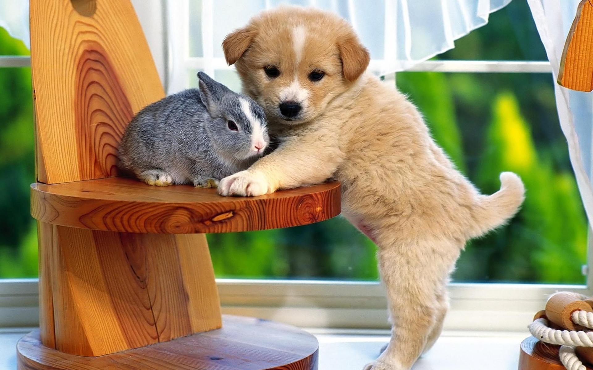 Открытки с животными разные, открытка днем