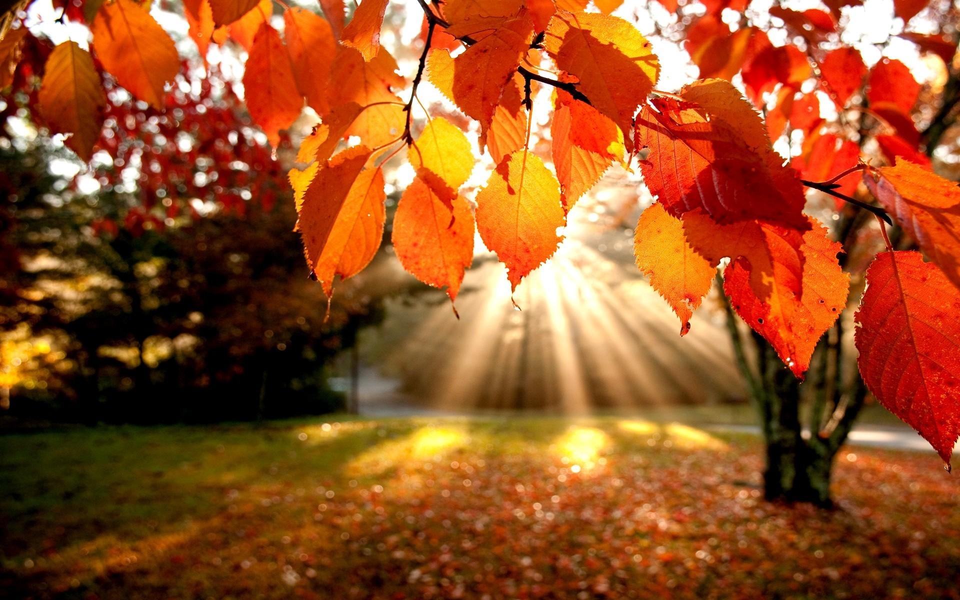 essay on autumn season in pakistan