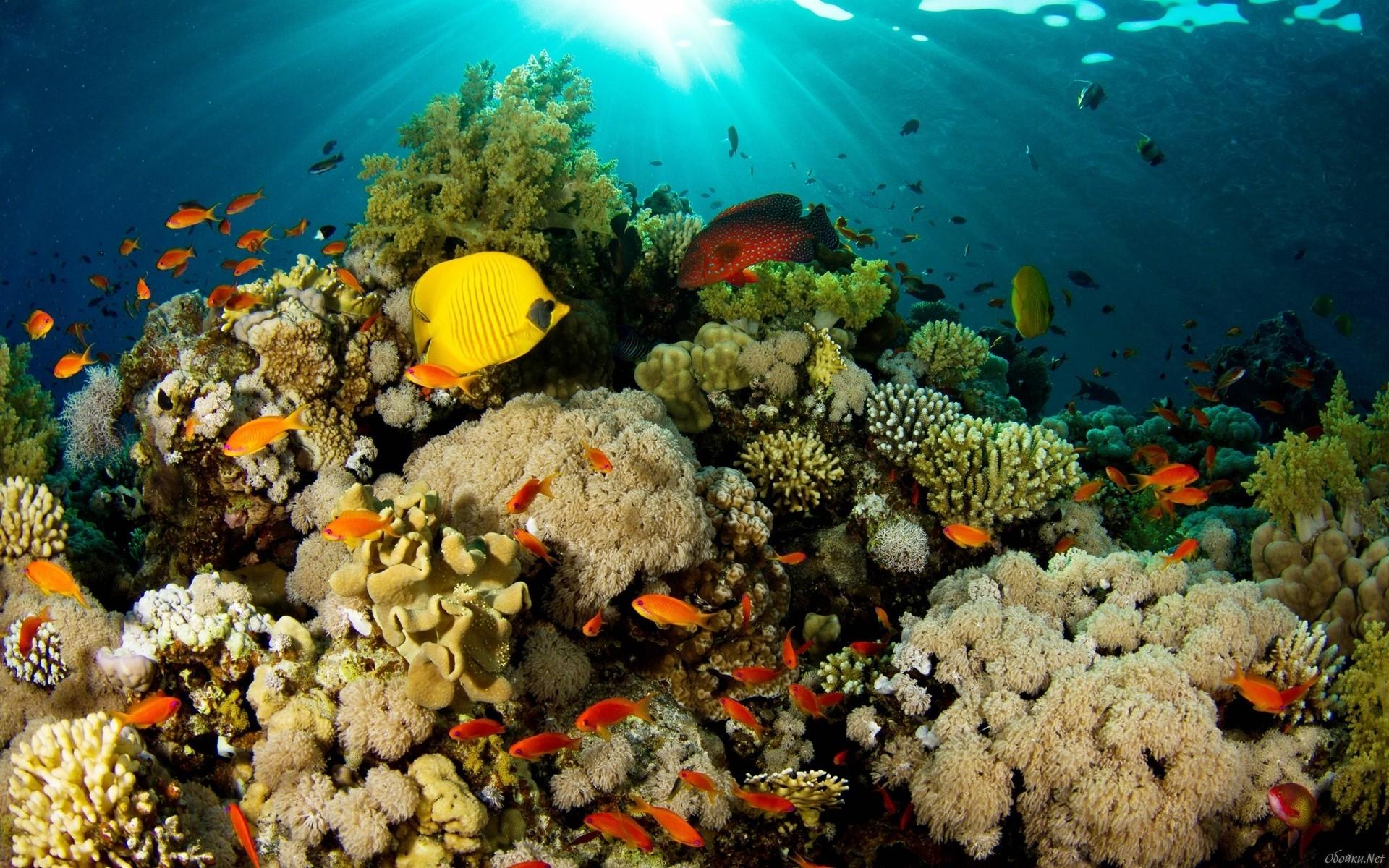 Яркие краски подводного мира  № 618961  скачать