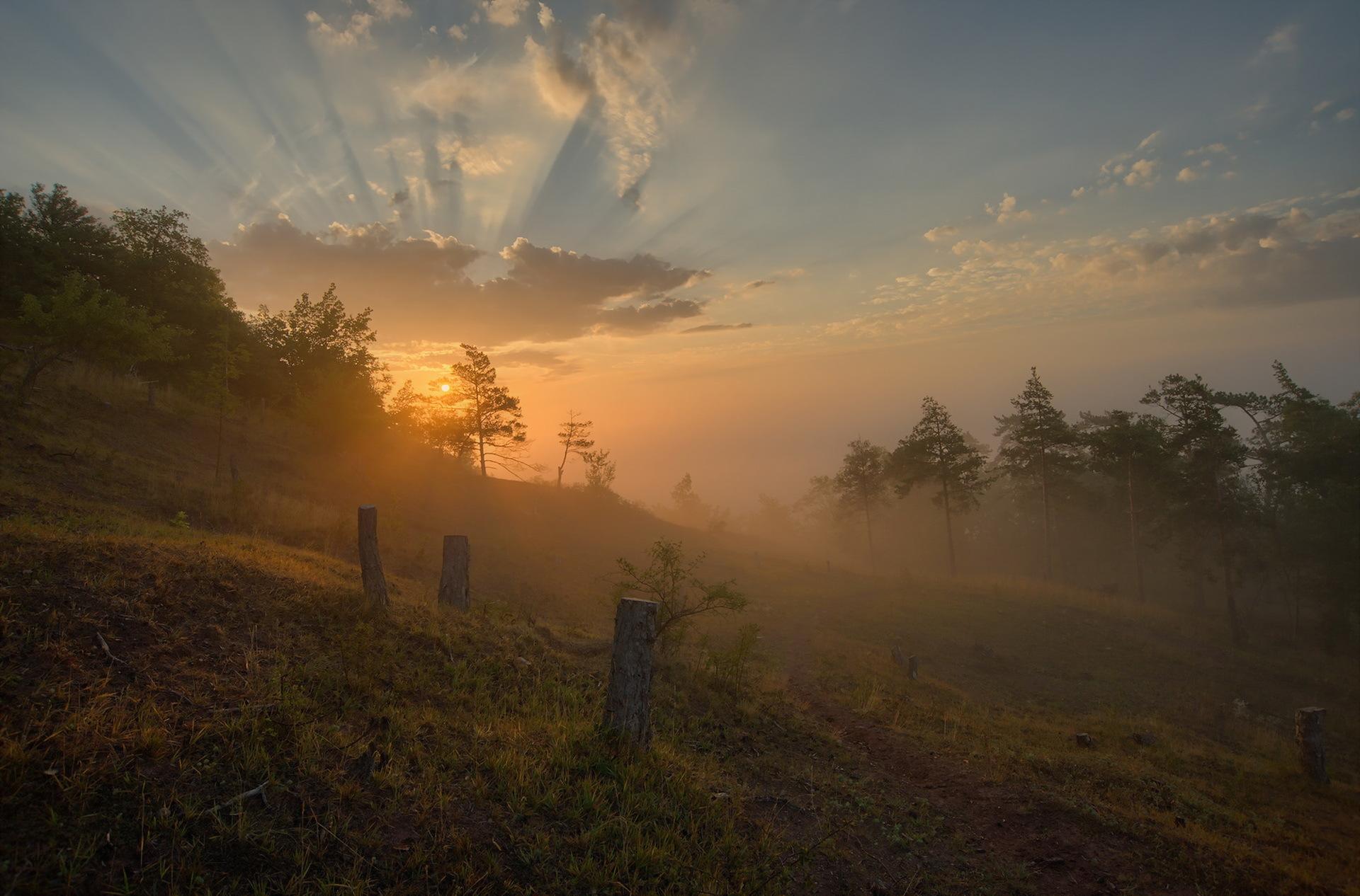 Закат в тумане в лесу  № 1140058  скачать