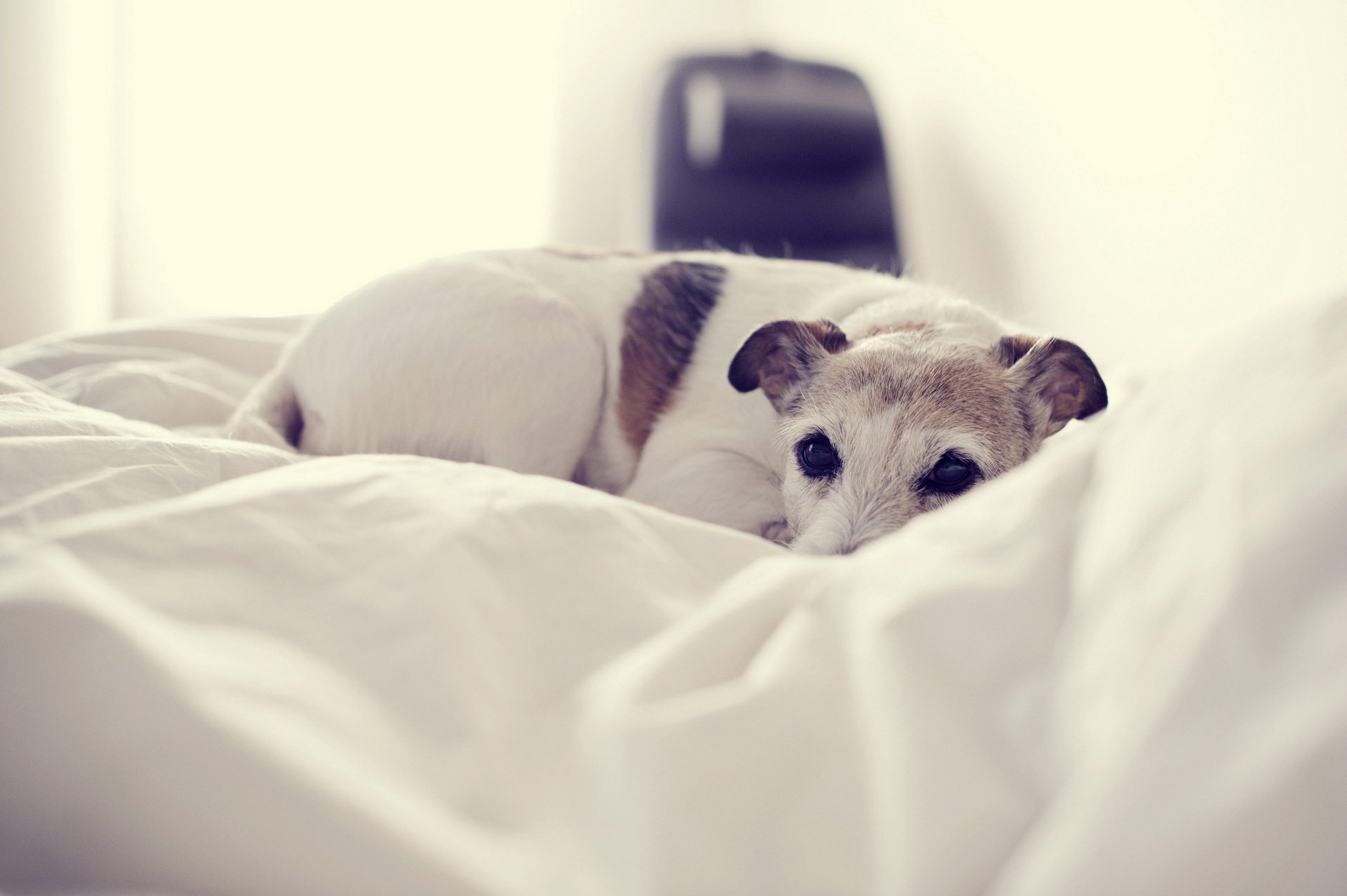 собака кровать  № 2010277 без смс