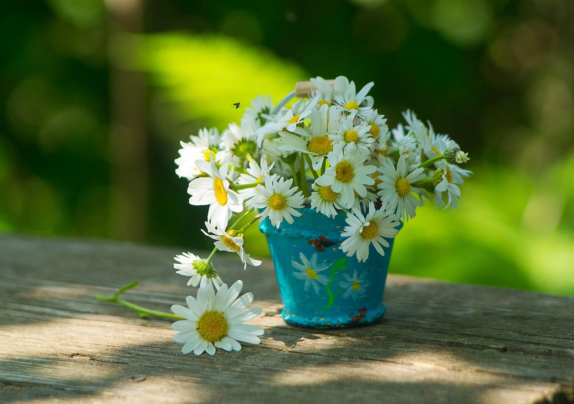 природа цветы ведро  № 464571  скачать