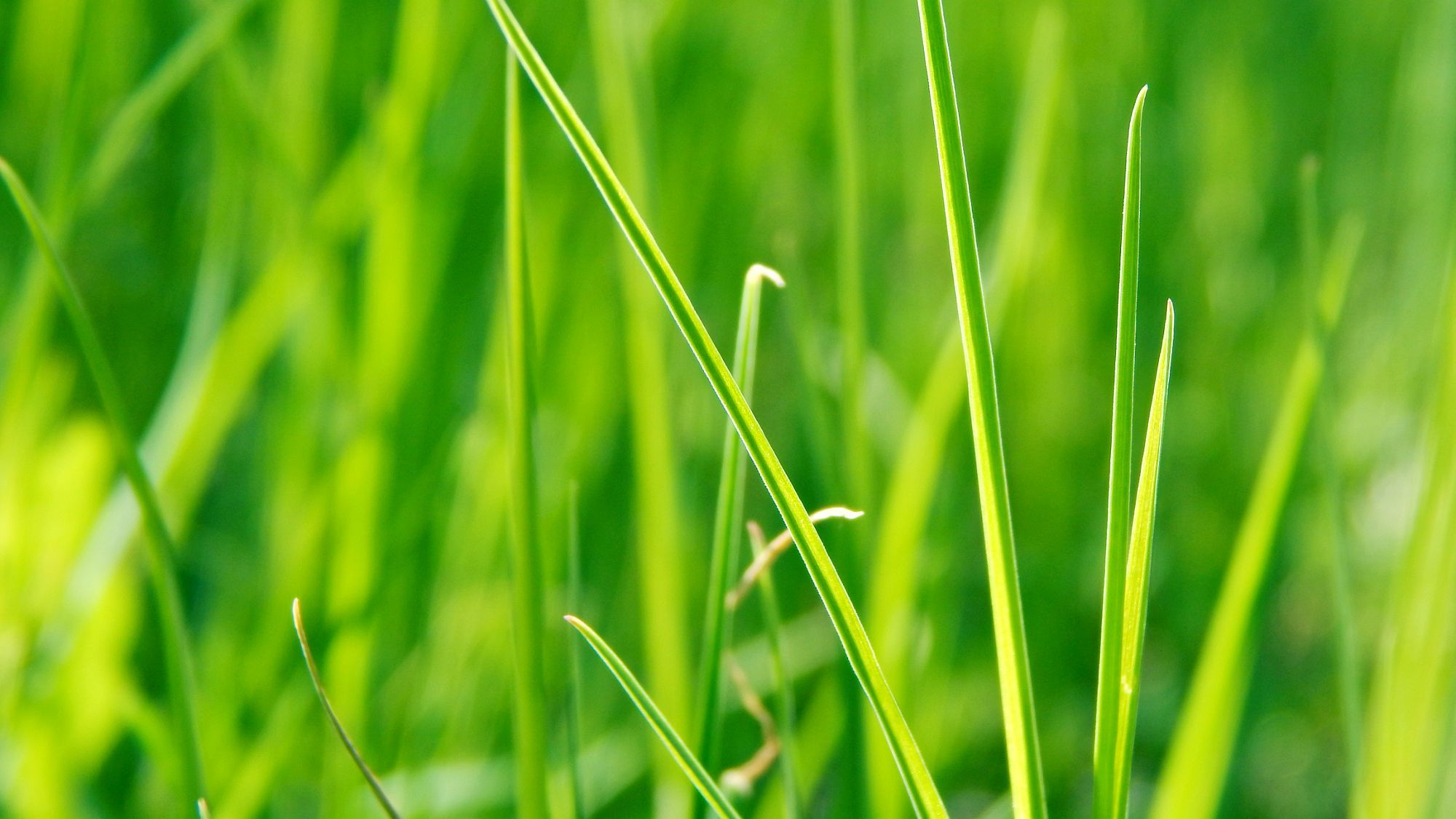 Зеленая, летняя трава  № 1074284 без смс