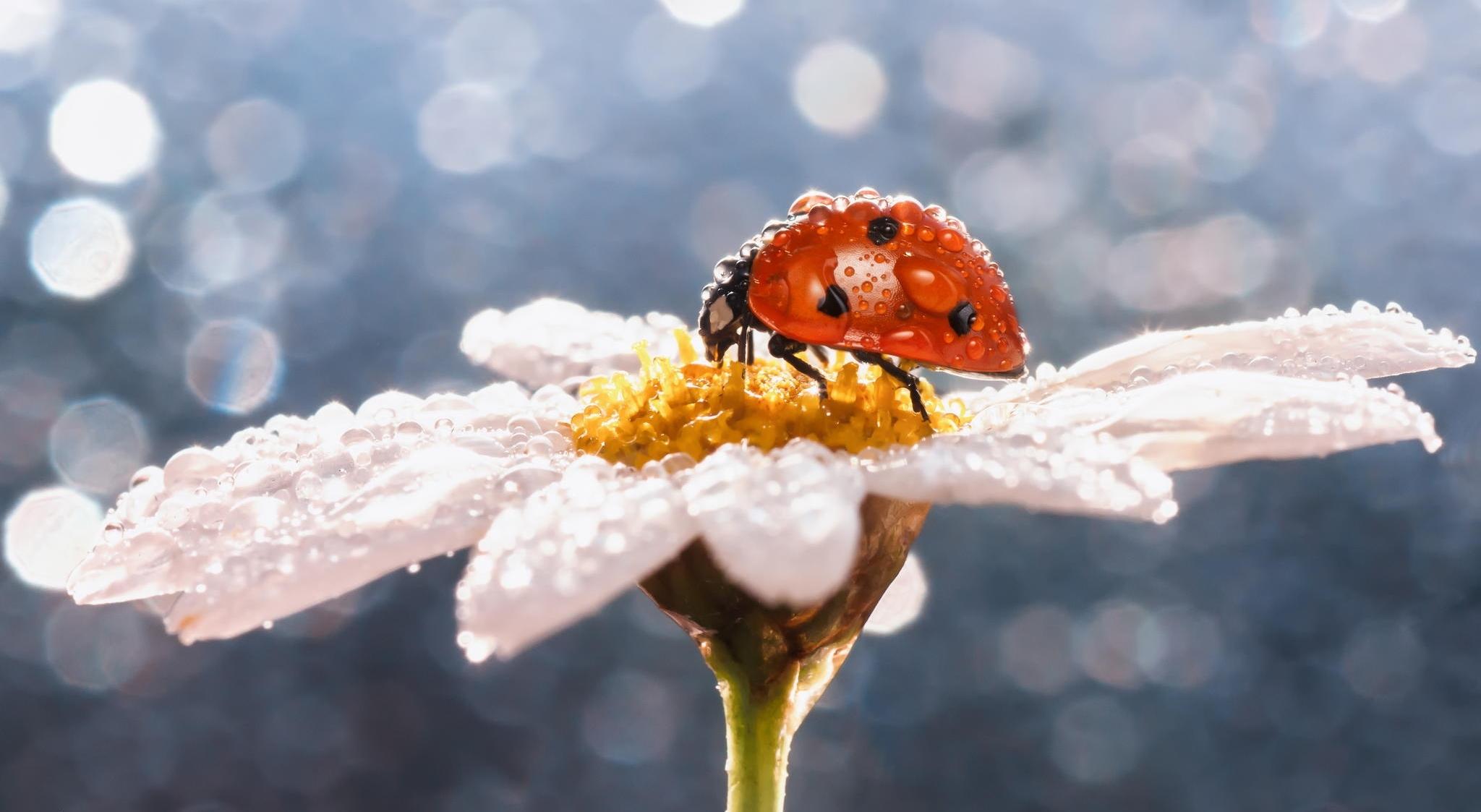 природа насекомое божья коровка цветок  № 3008091 загрузить