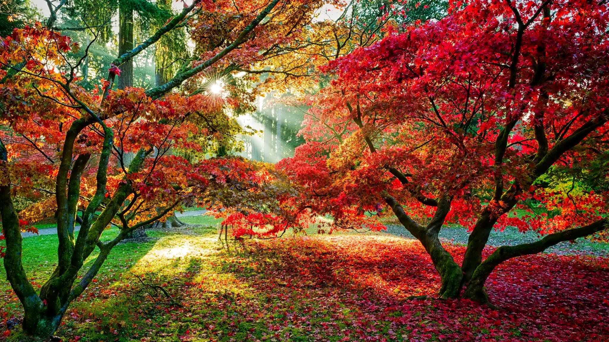 Скачать Осенние Фотографии На Обои В Телефон