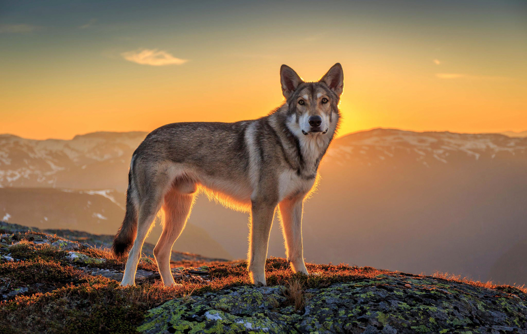 Собака на фоне заката  № 2038640 загрузить