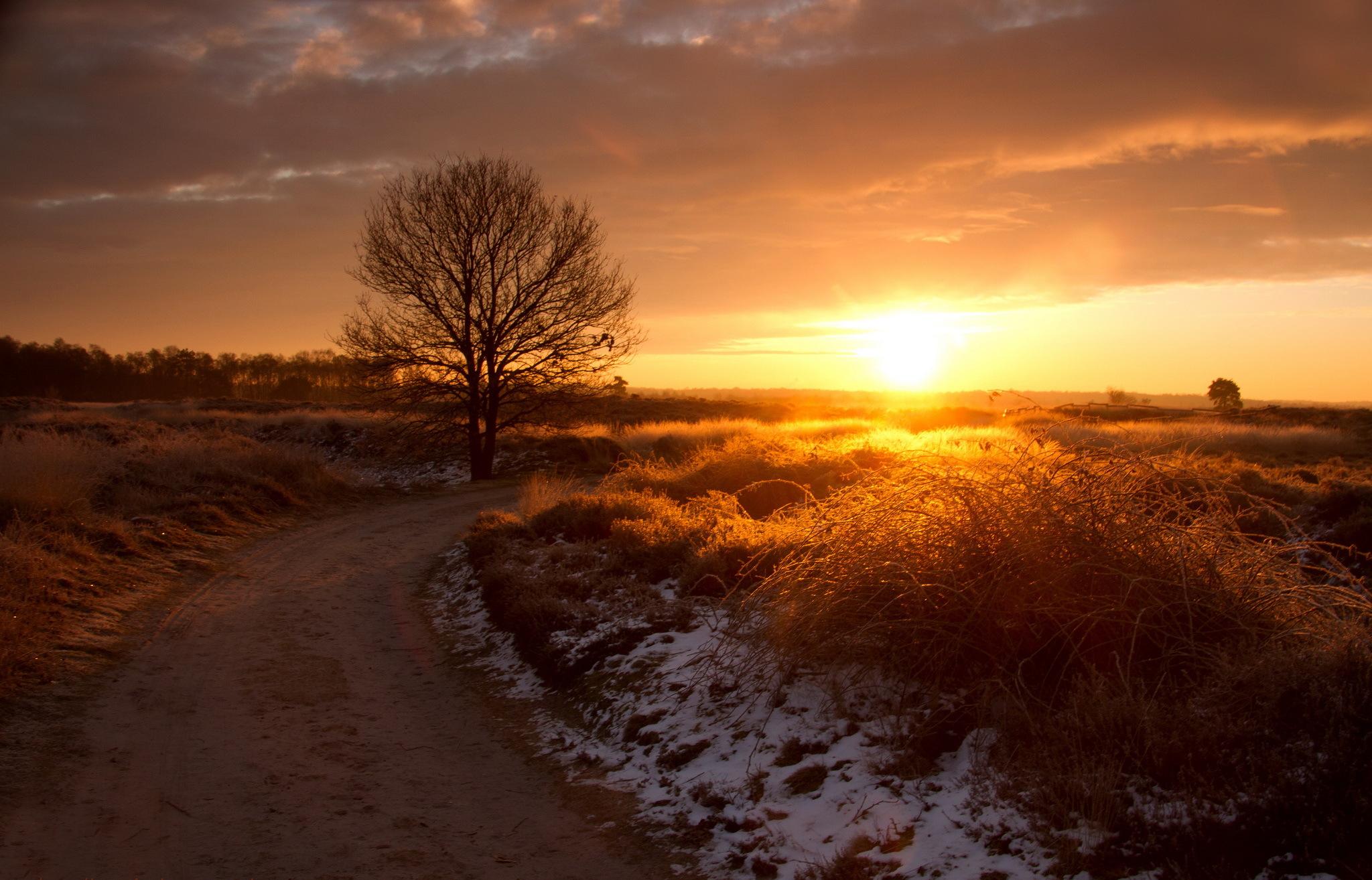 дорога, солнце, трава, деревья  № 3117787 загрузить