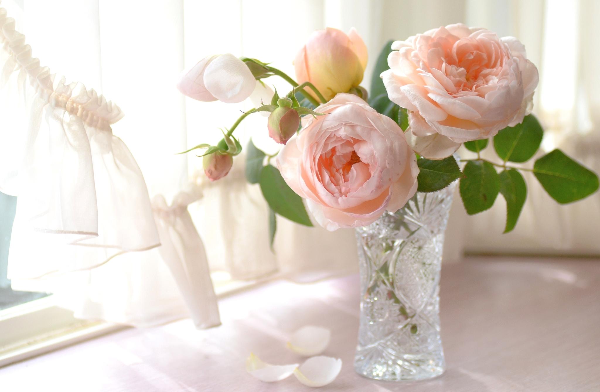 розы цветы ваза  № 1332556 бесплатно
