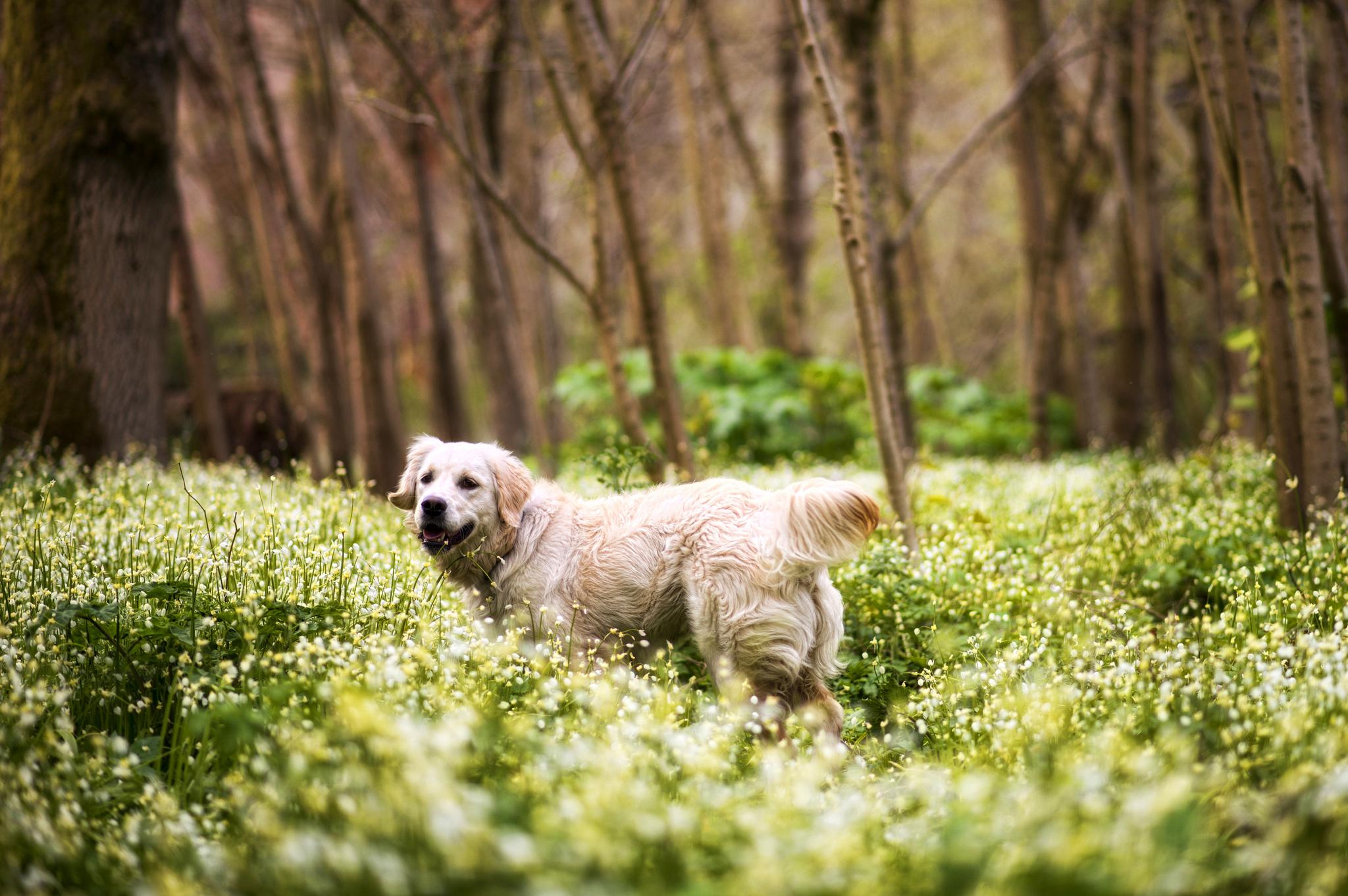 собака дерево лес  № 1114302 без смс