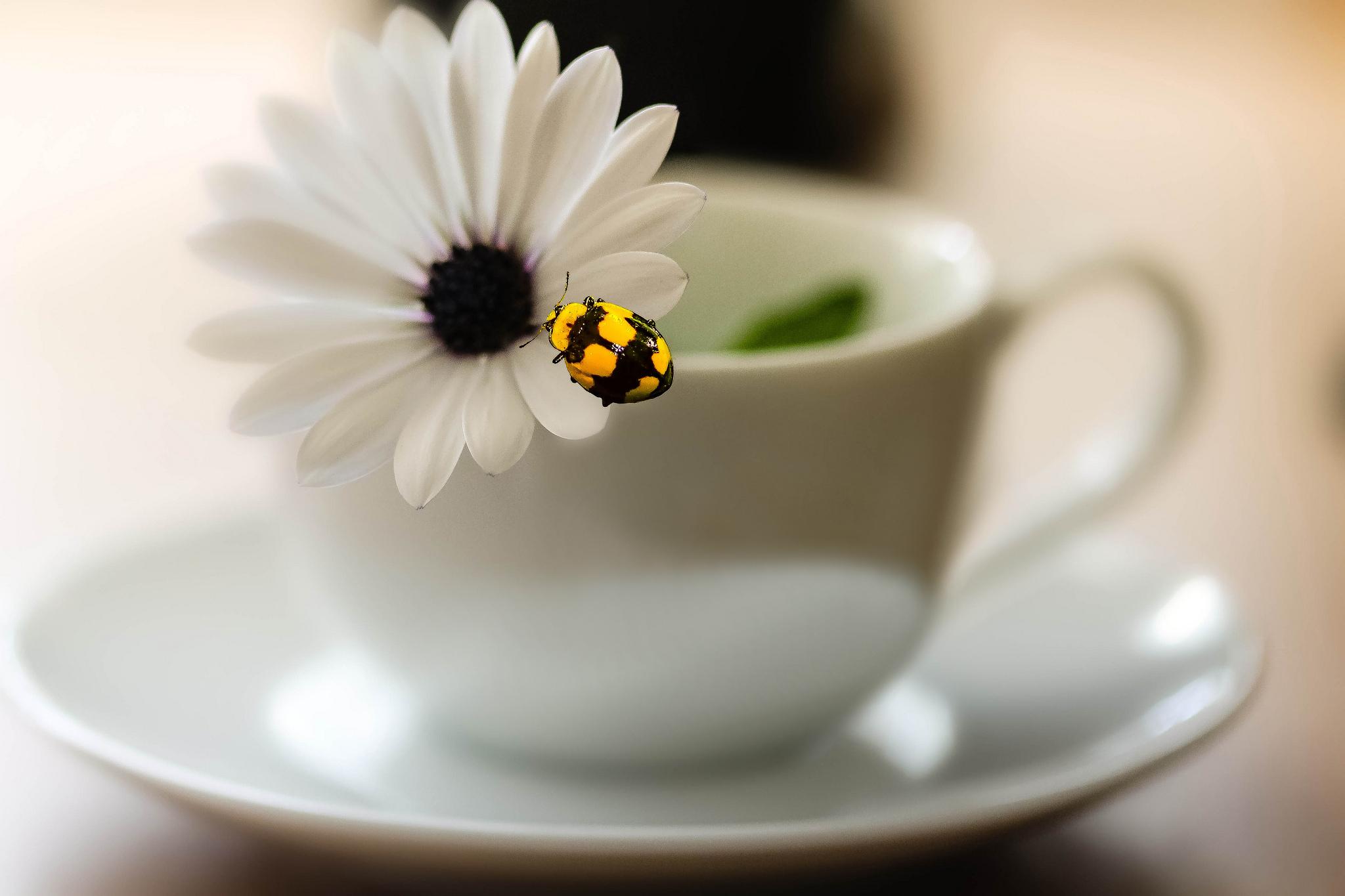 природа цветы чашка  № 1486852 загрузить