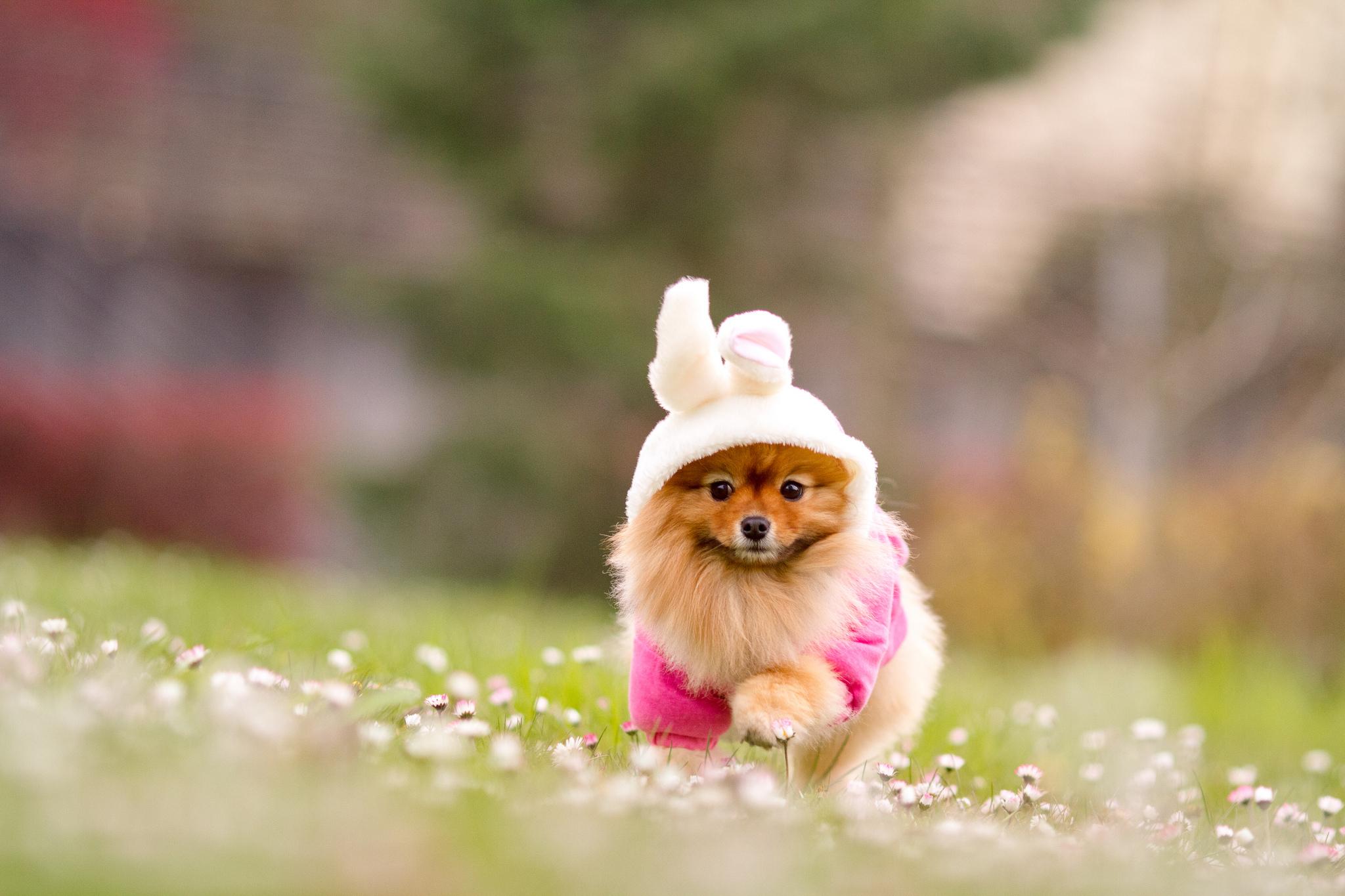 природа животные собака девочка жизнь nature animals dog girl life  № 3951026  скачать