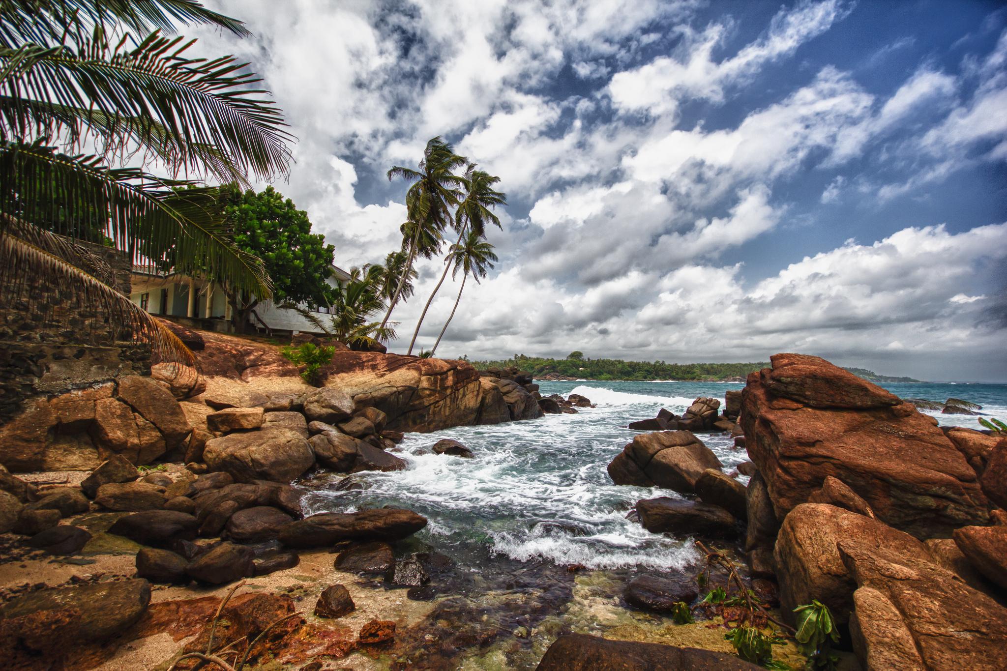 берег камни пальмы shore stones palm trees  № 792064 загрузить