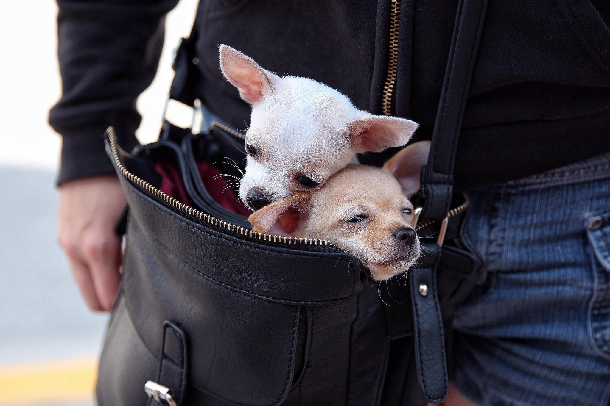 собака пакет сумка  № 1143249 без смс