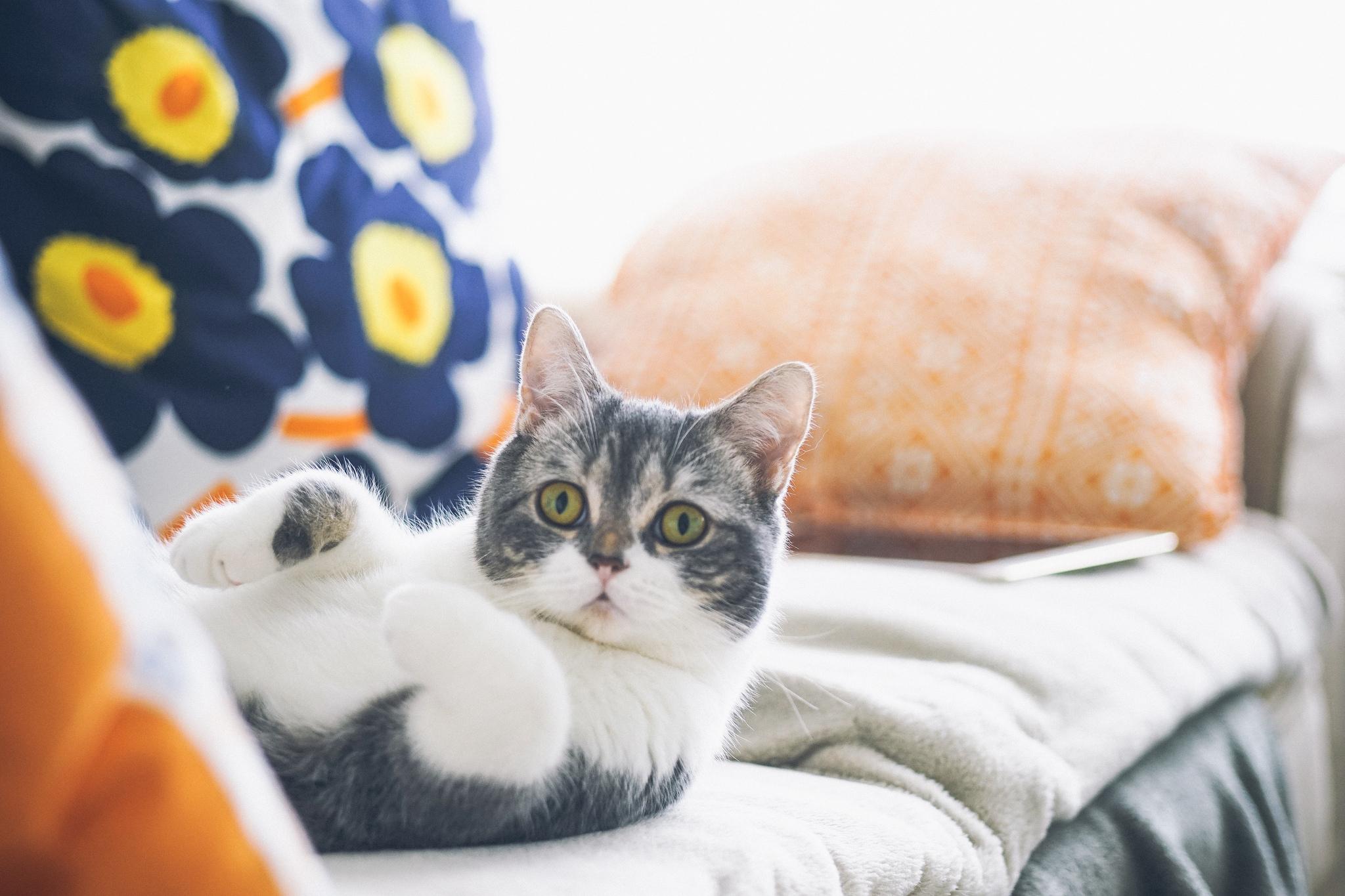 упитанный кот лапки  № 2866422 загрузить