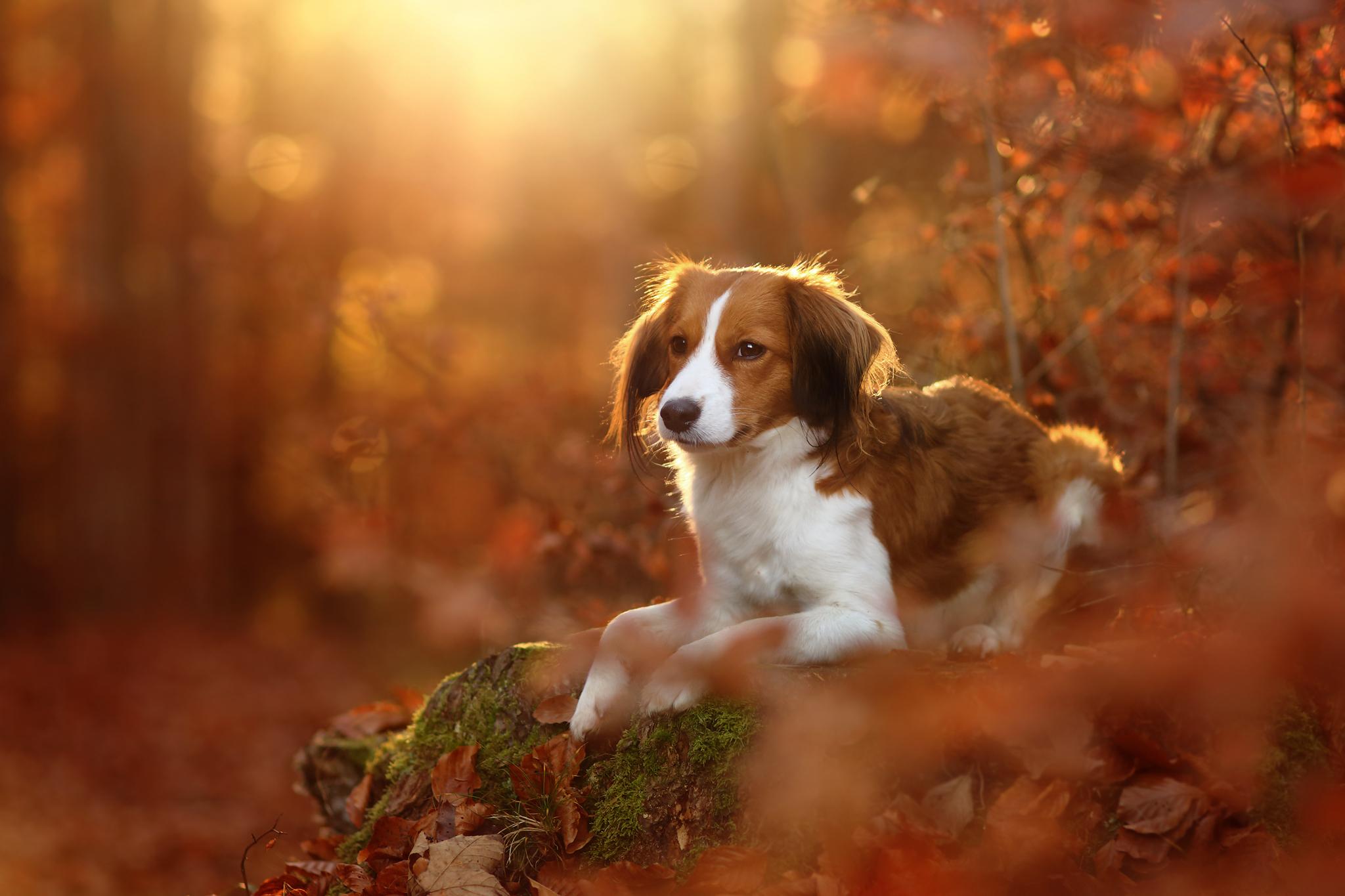 природа животные собака осень листья  № 2019451 загрузить