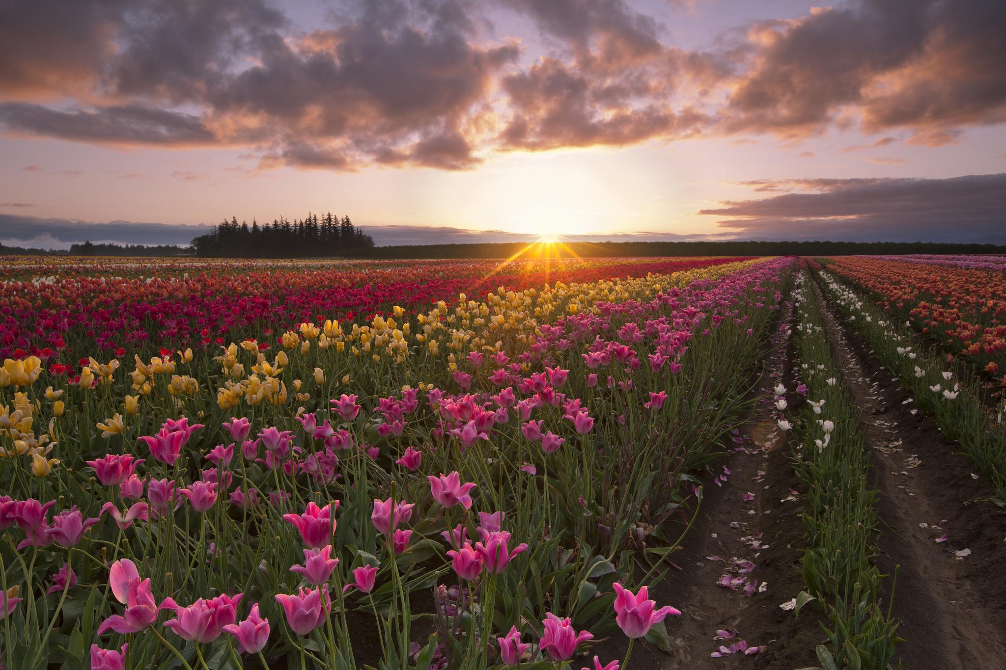 поле цветы рассвет field flowers dawn  № 3837007 без смс