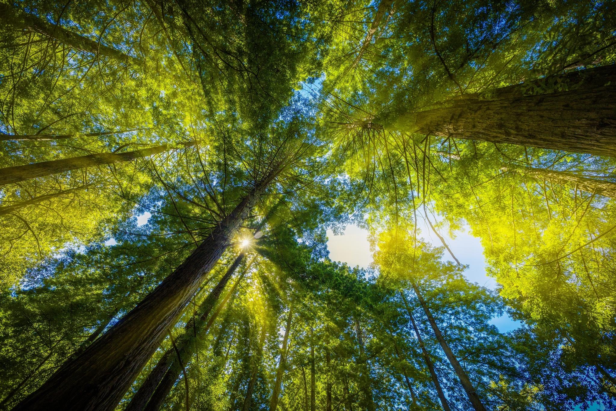Лучи лес деревья  № 3847428  скачать