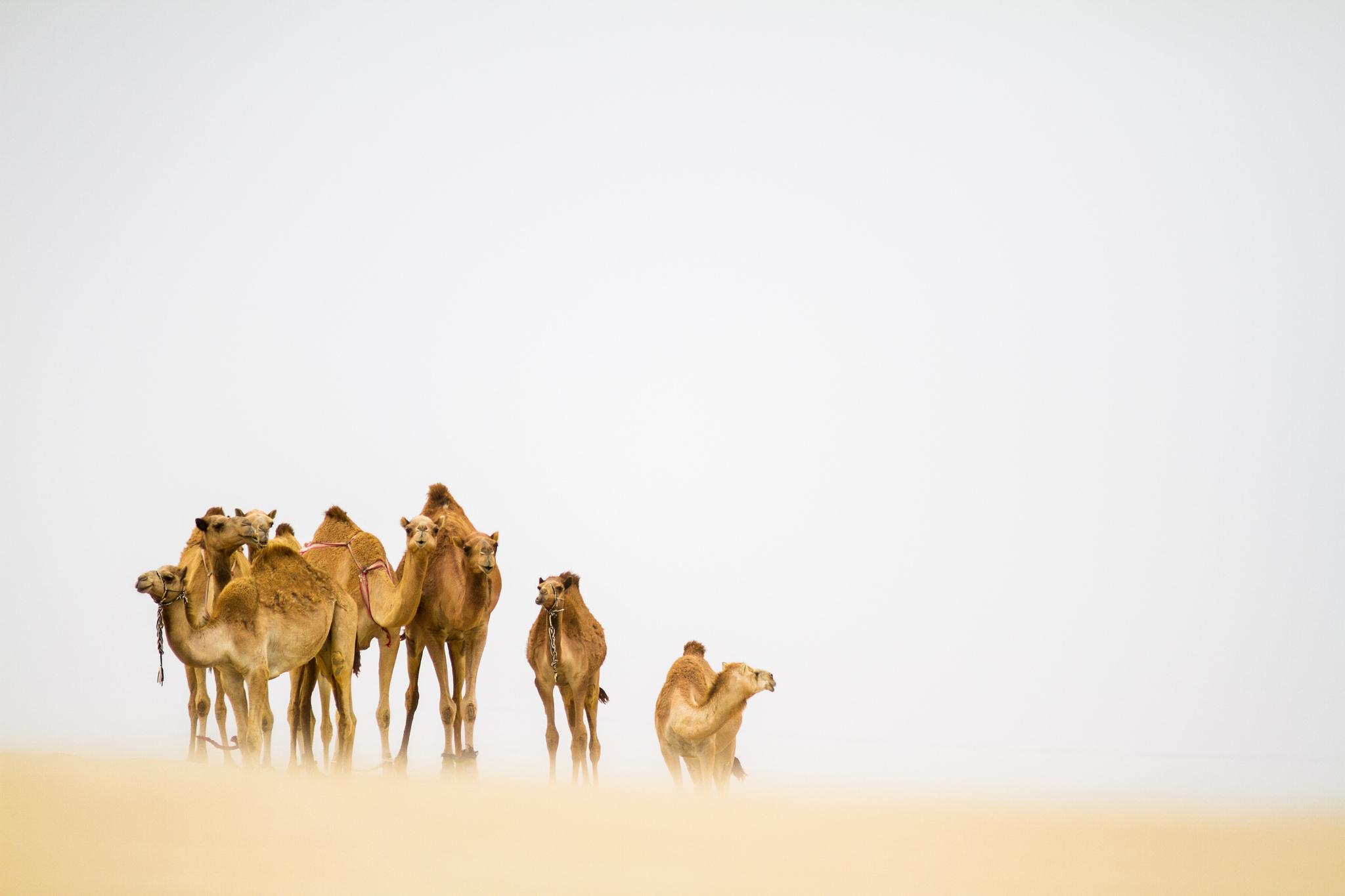 природа животные пустыня  № 3146269 загрузить