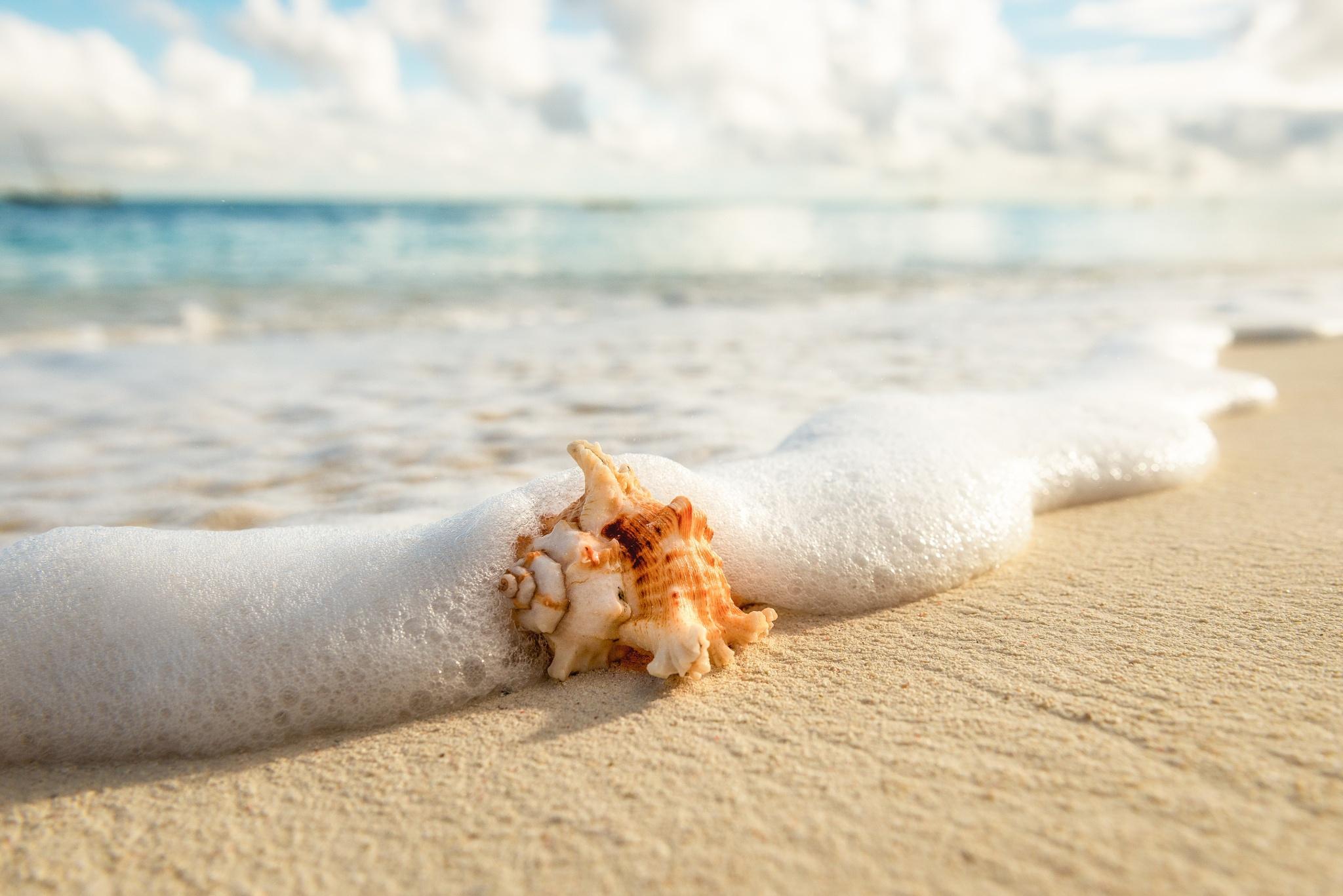 природа ракушка песок nature shell sand  № 1246775 загрузить