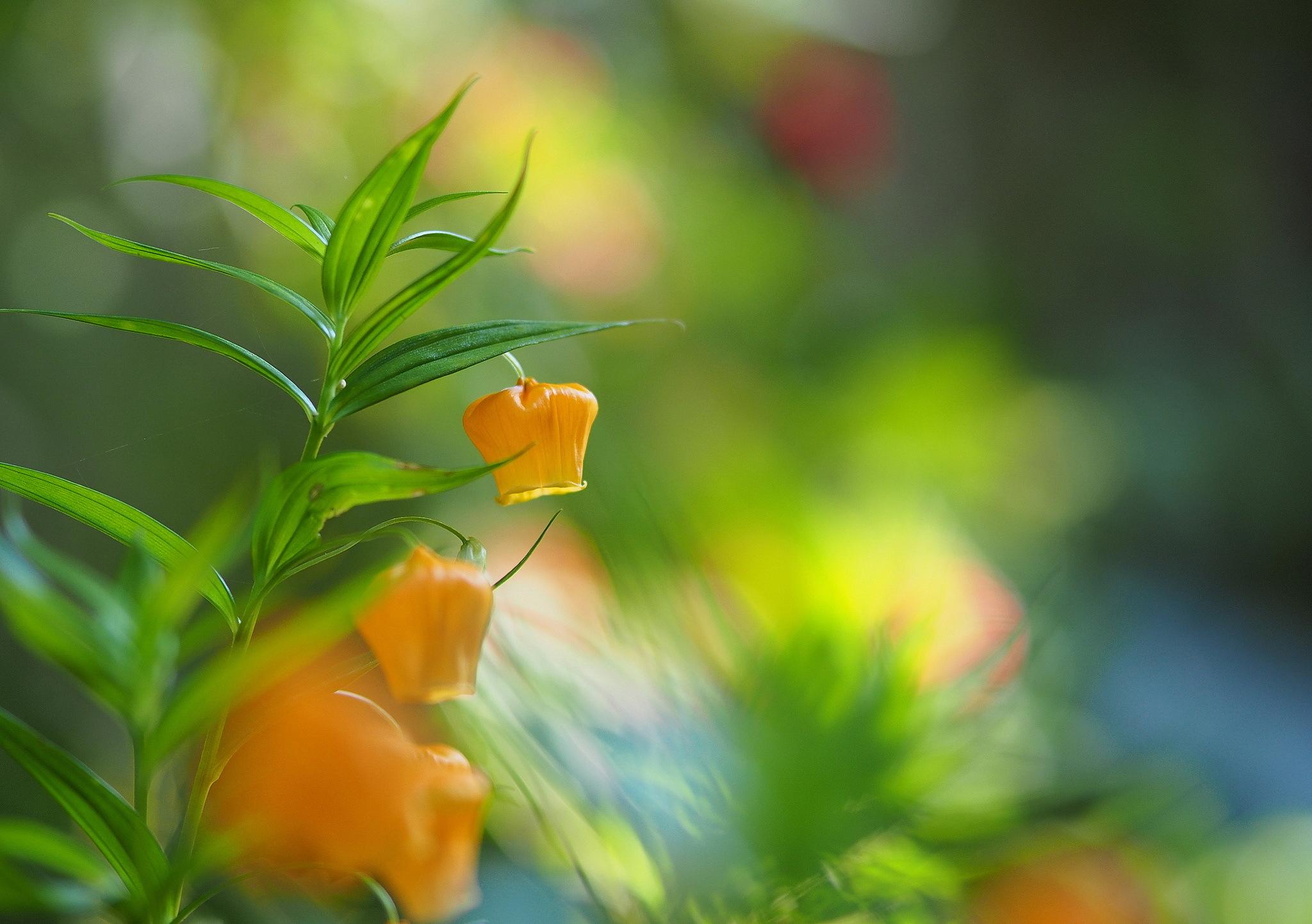 Желтые ромашки цветы желтые цветы размытость  № 3831043 загрузить