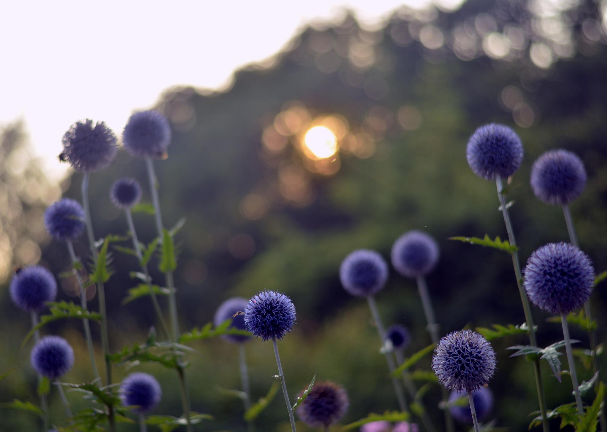 цветы солнце блики  № 1247160 загрузить