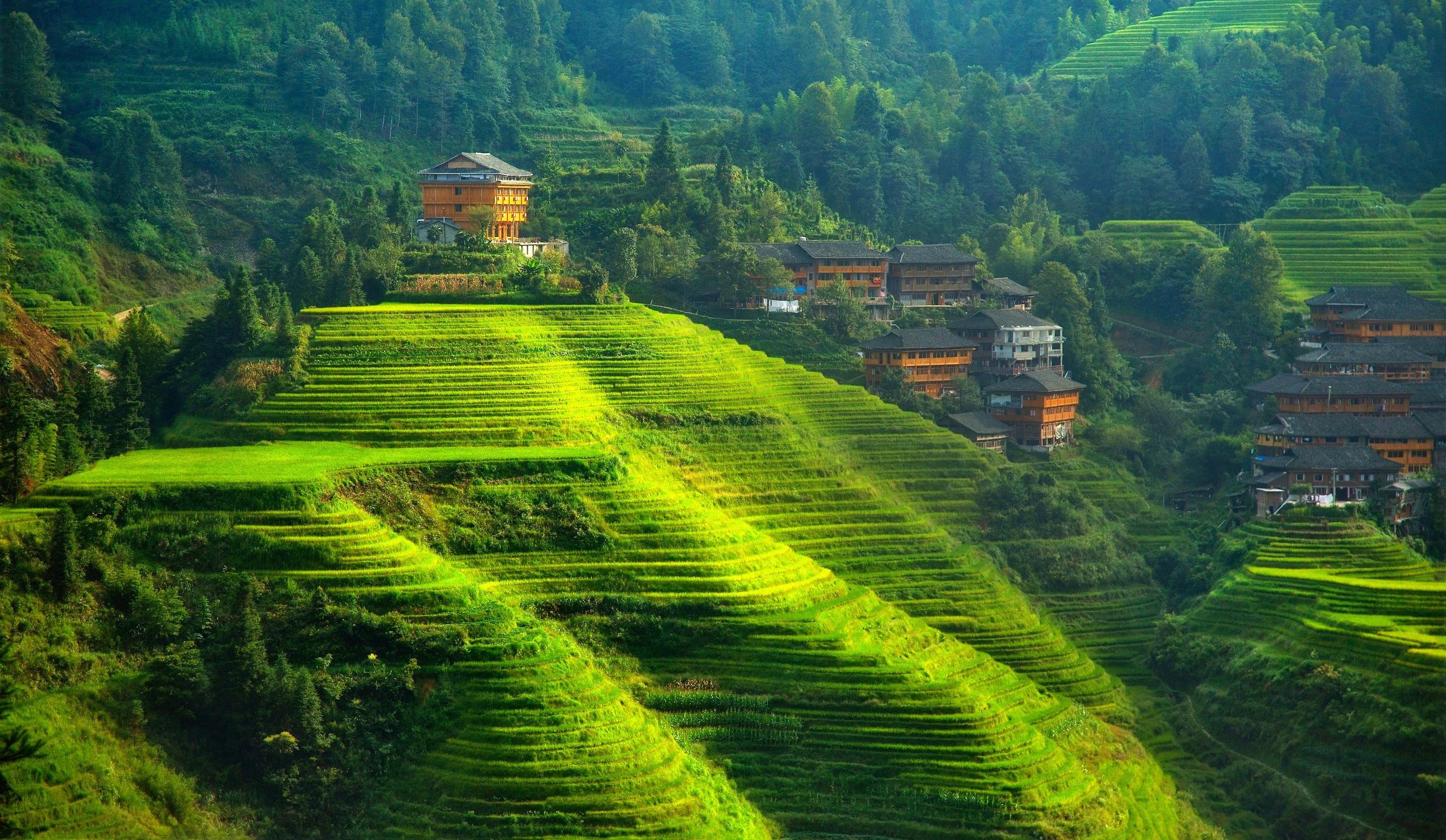 xinhua china anhui laian pond cypress scenery scenery - HD2500×1453