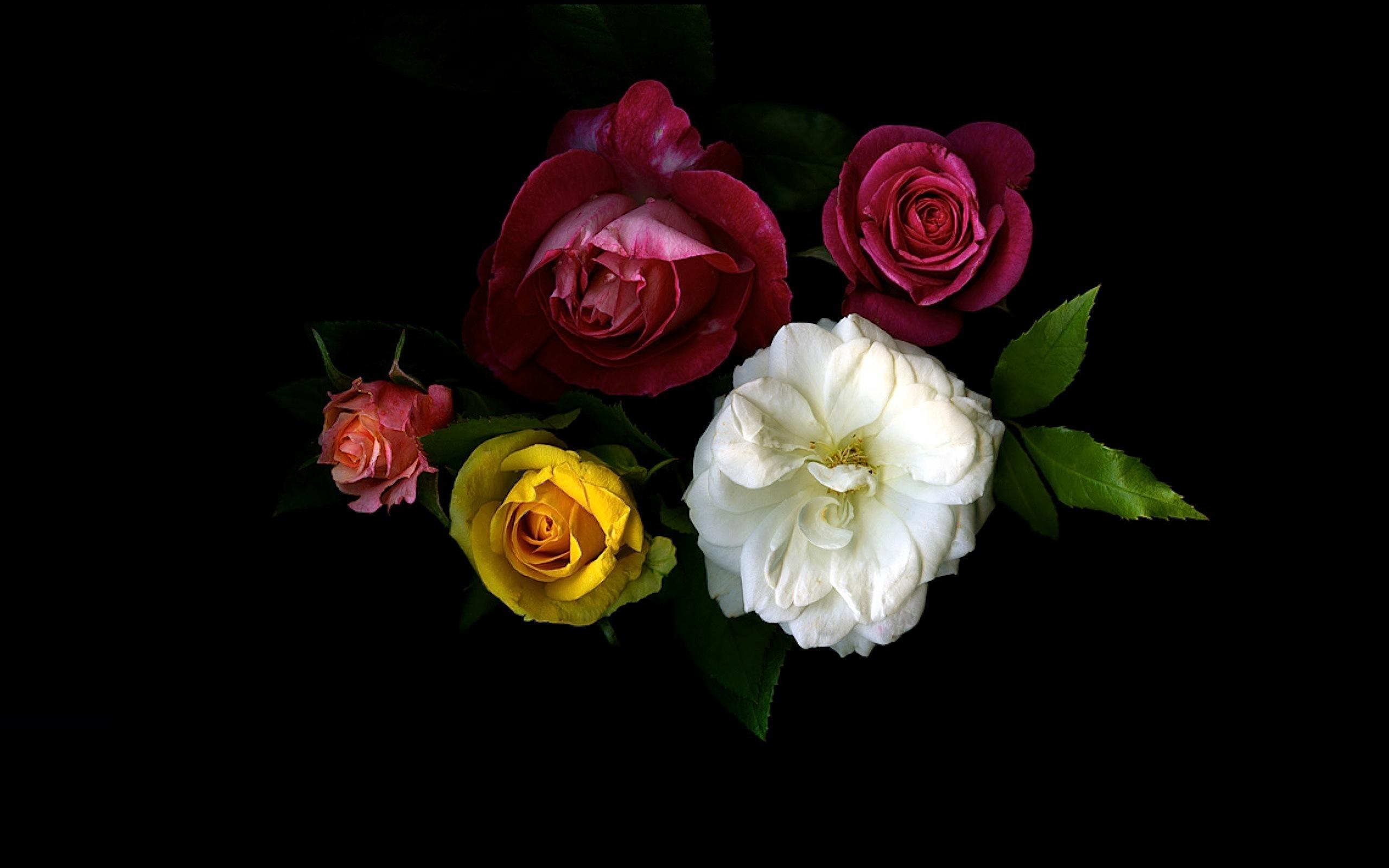 Букет цветов на черном фоне