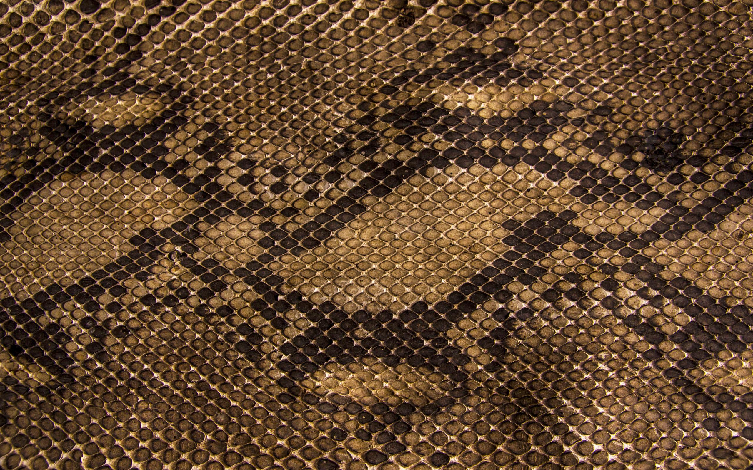 Текстура кожи змеи  № 3269794 бесплатно