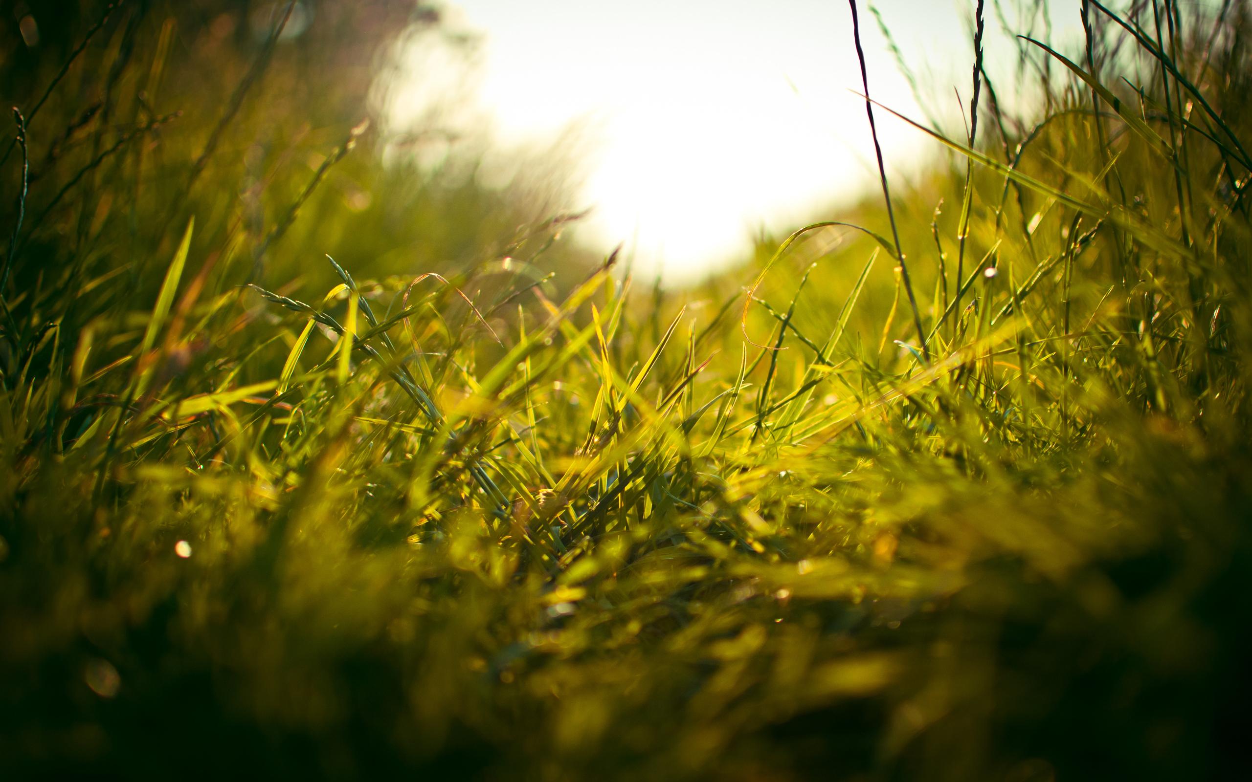 Девочка лучи тропинка трава  № 3725935 бесплатно