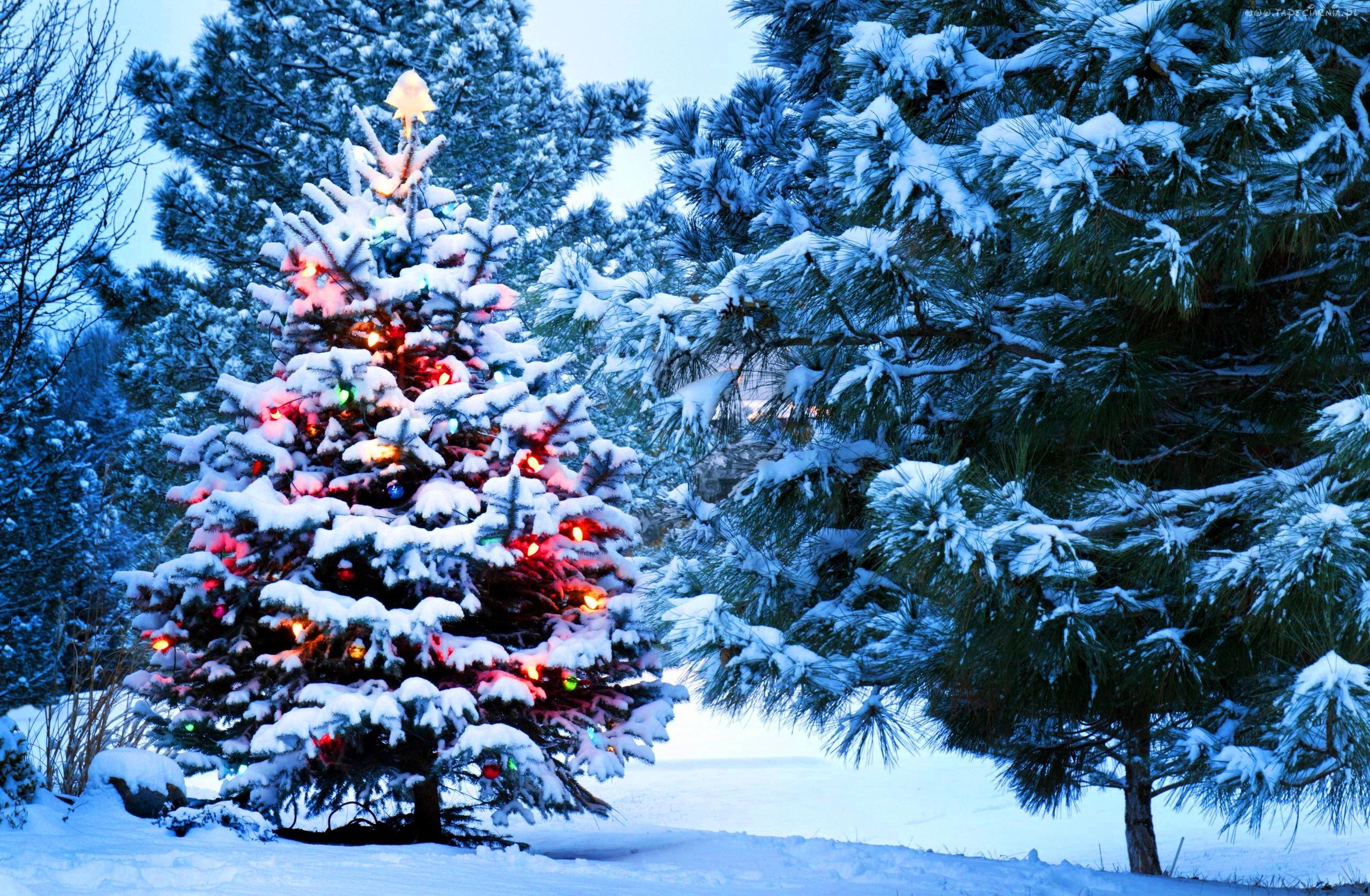 Парк зима ели  № 2388852 бесплатно