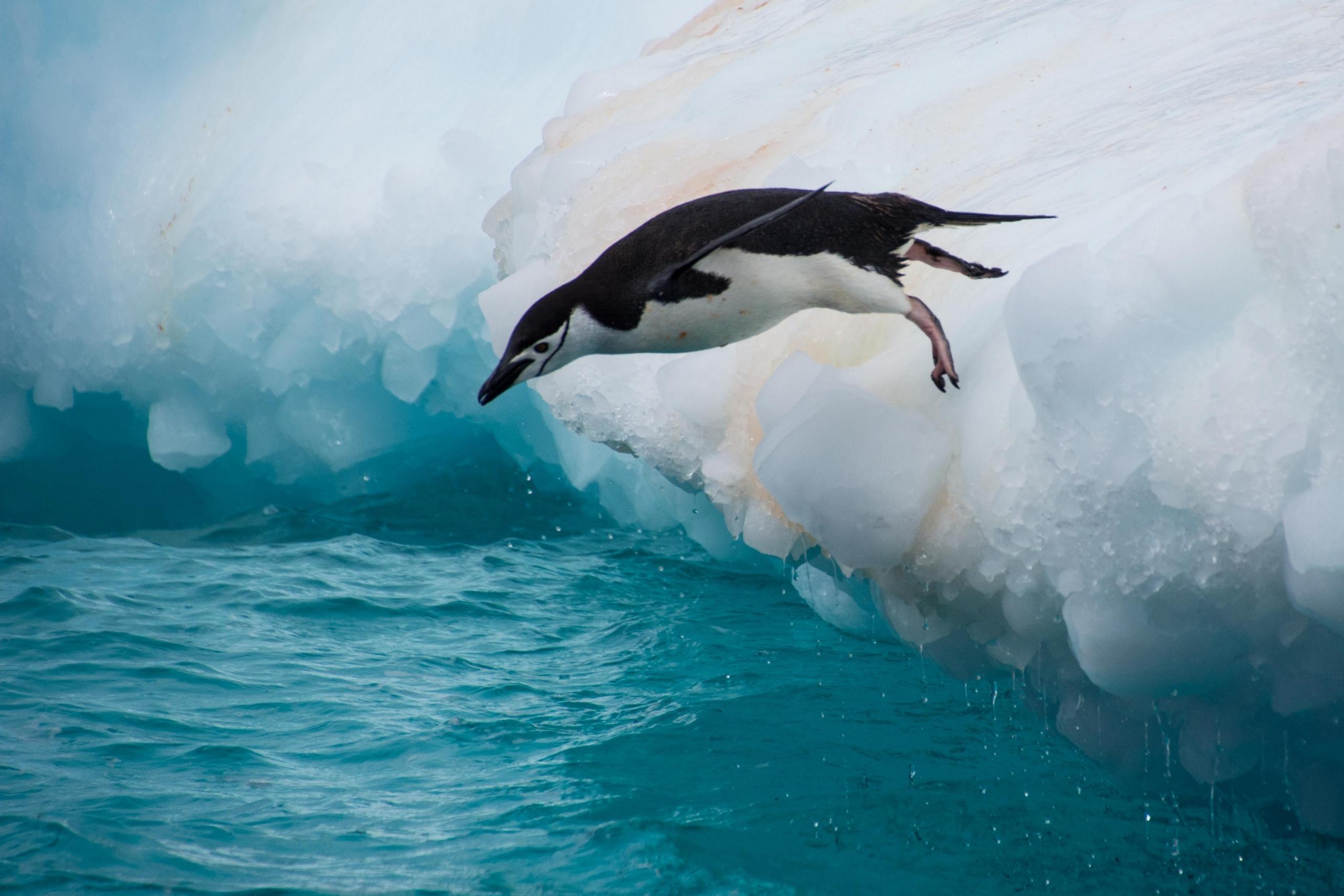 пингвины на глыбе льда  № 91192  скачать