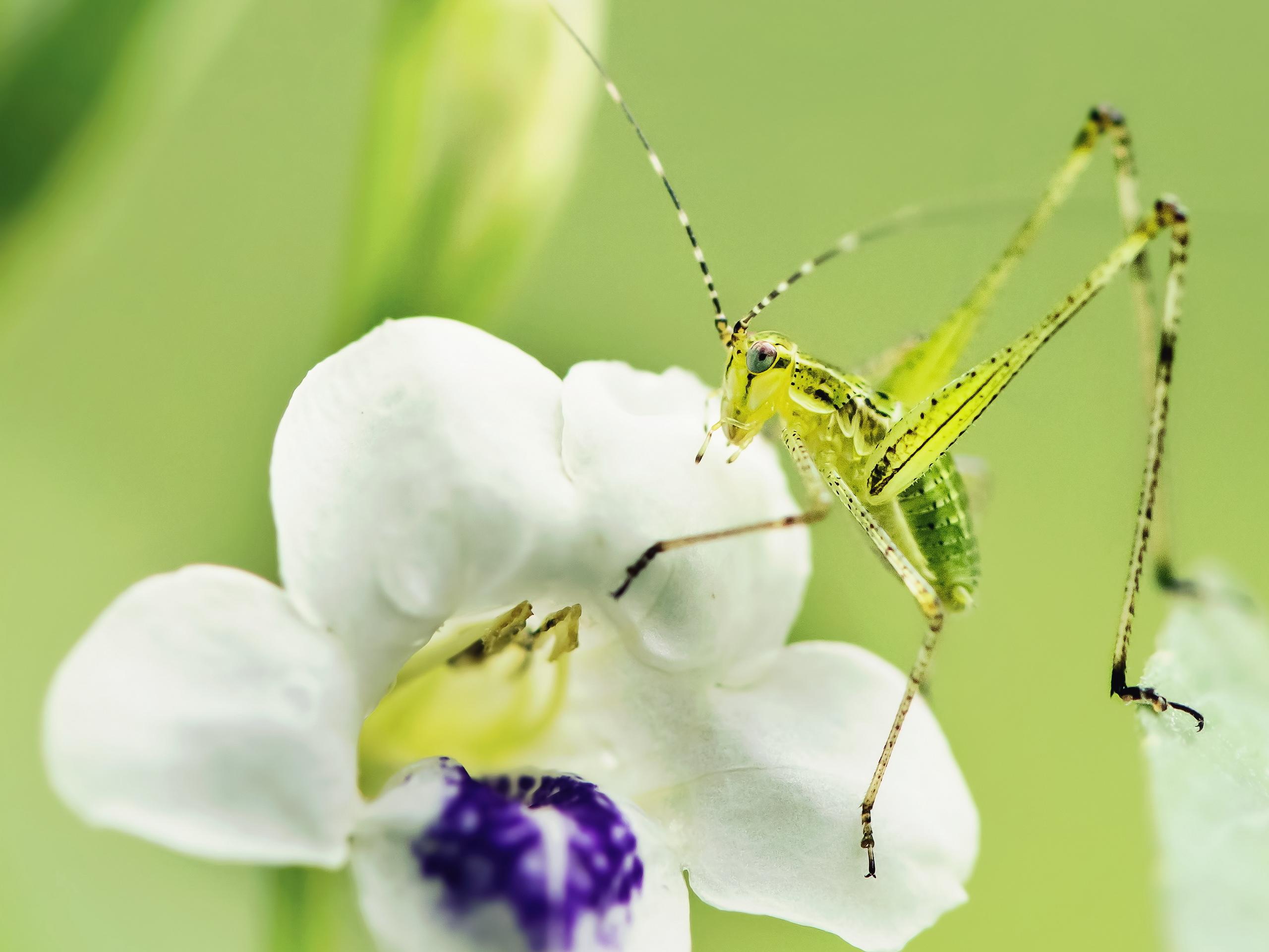 макро одуванчик животное насекомое пчела цветы природа  № 3007323  скачать
