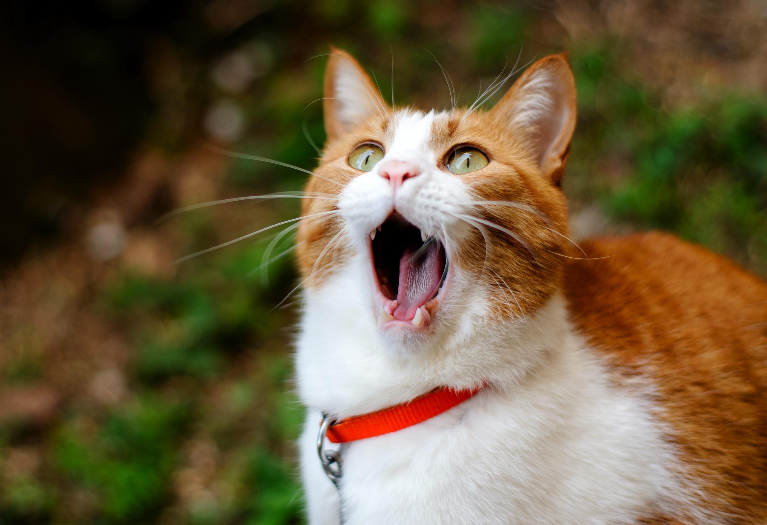 Удивленные котенки  № 1097840 загрузить