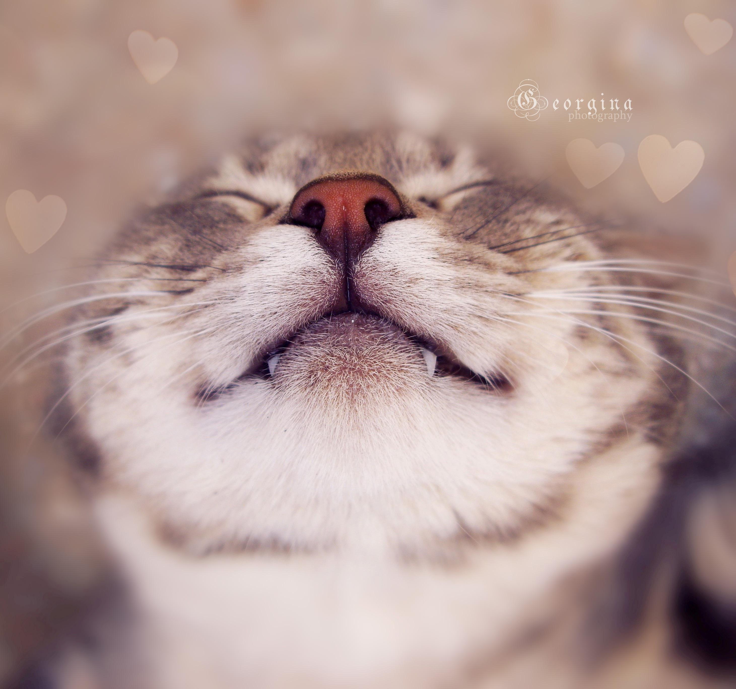 кошка язык глаза сердечки  № 2824776 загрузить