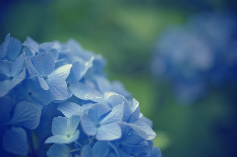 Размытость голубая  № 2072593 бесплатно