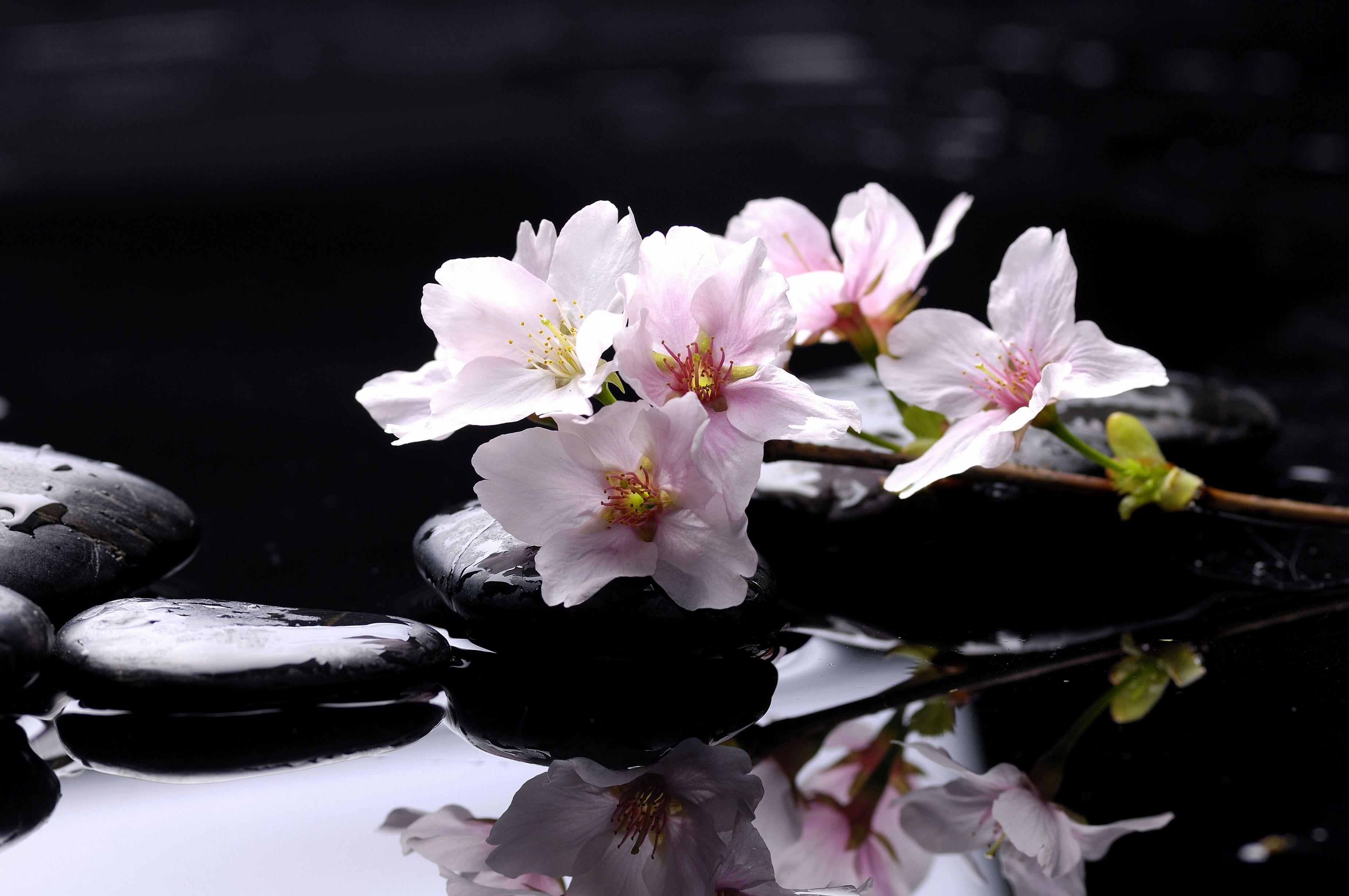 Камни черные цветок  № 2989346 без смс