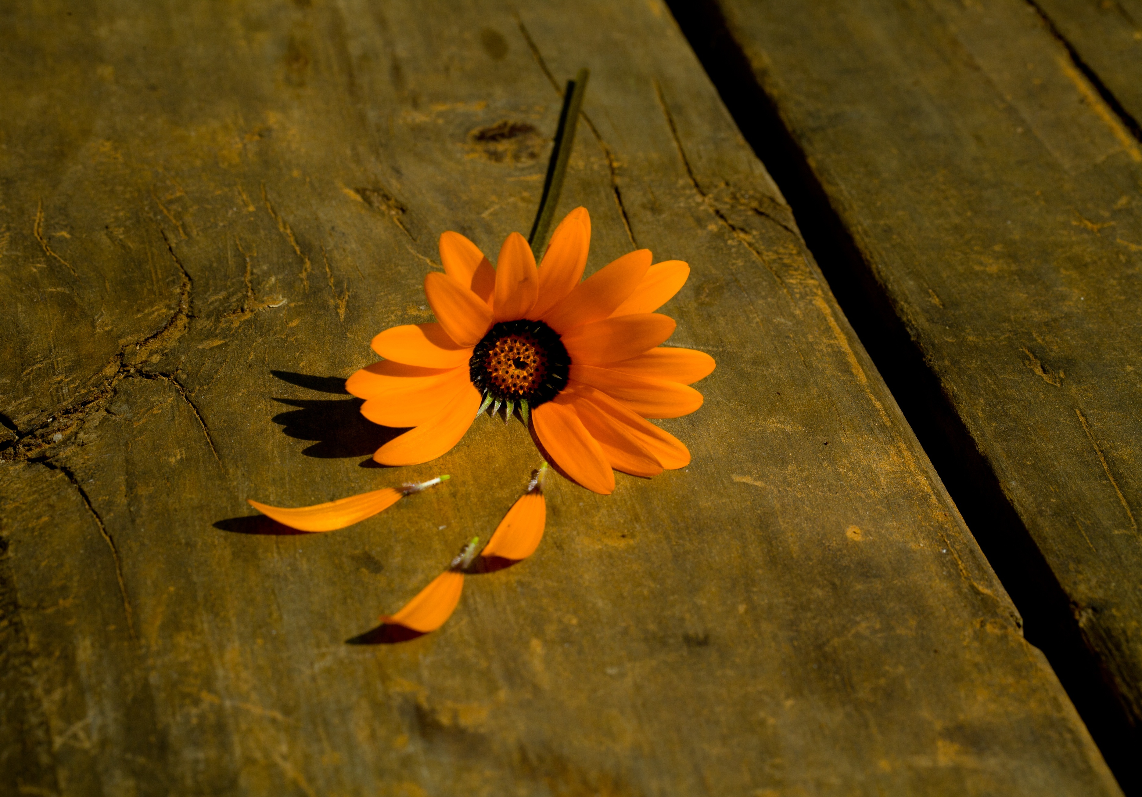 Опавшие лепестки цветения  № 3170404  скачать