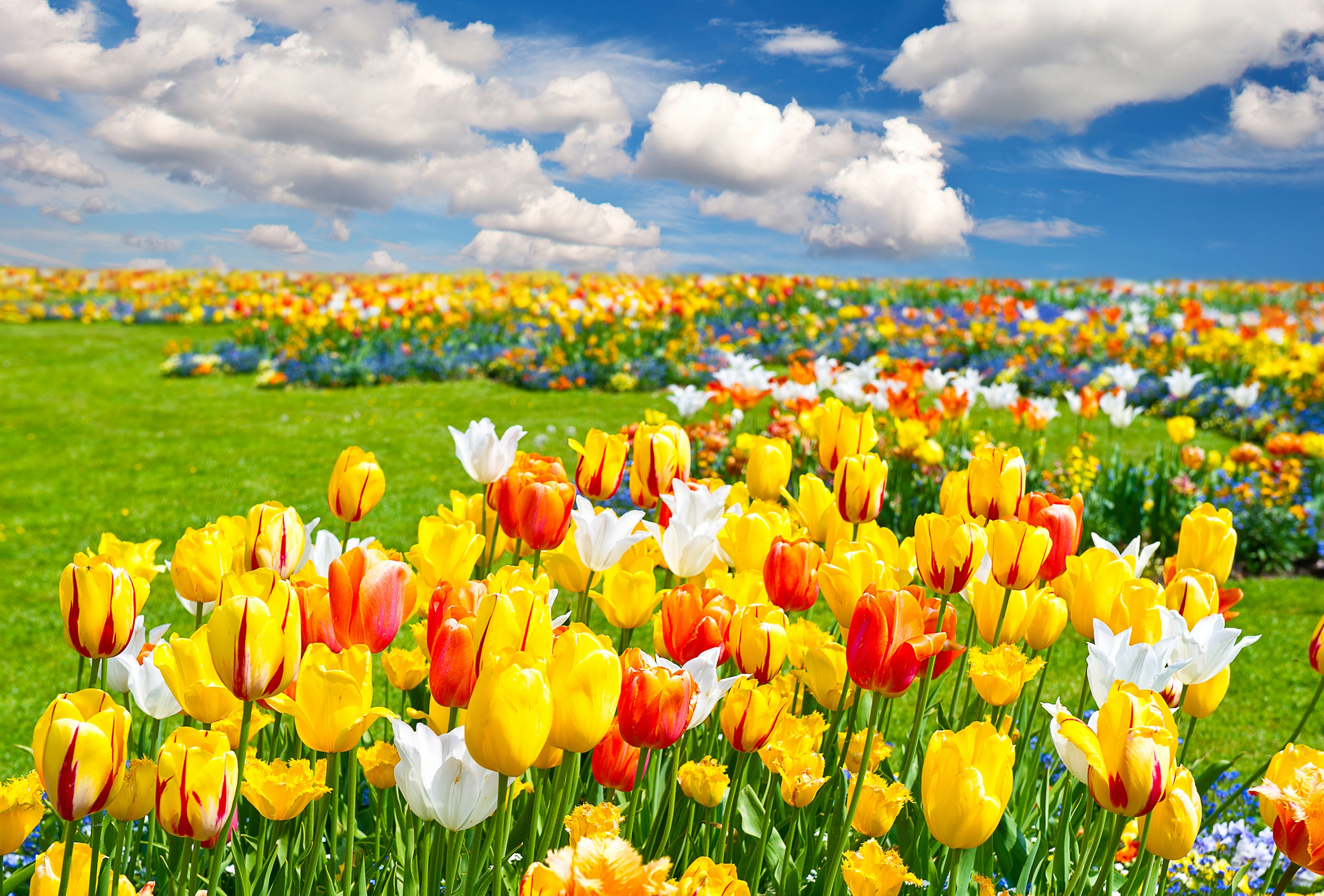 архитектура страны цветы тюльпаны желтые пейзаж  № 2568576 бесплатно