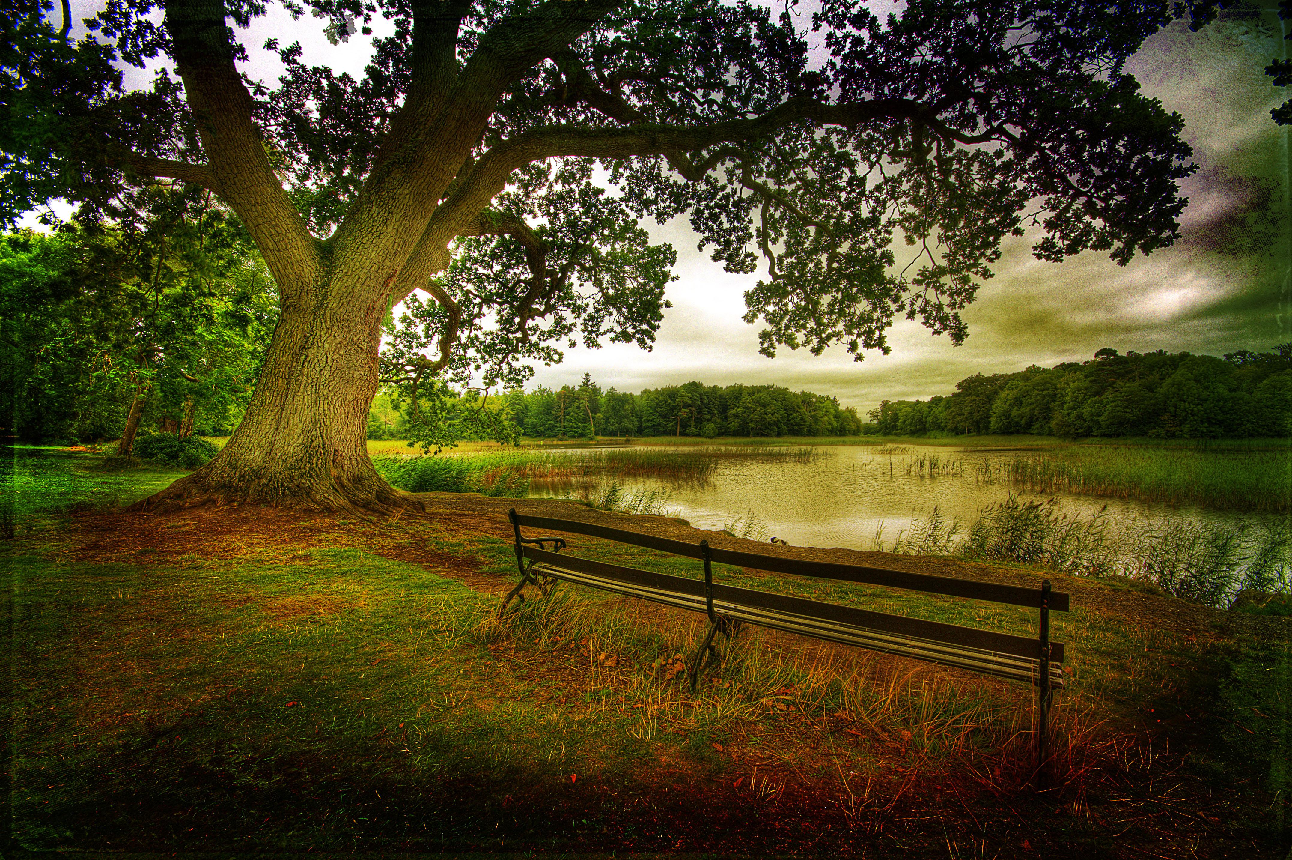 накренившееся над речкой дерево  № 1217018 без смс