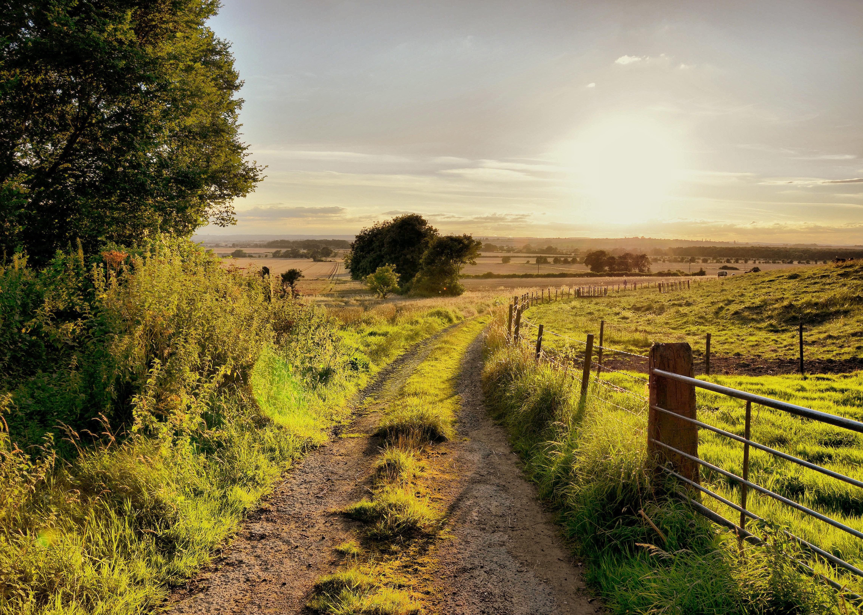 дорога, солнце, трава, деревья  № 3117749 бесплатно