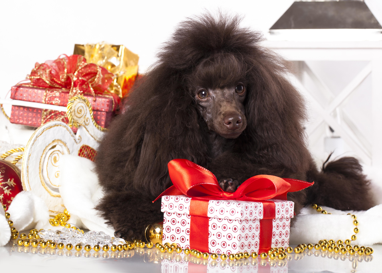 собака пакет сумка  № 1143367 бесплатно