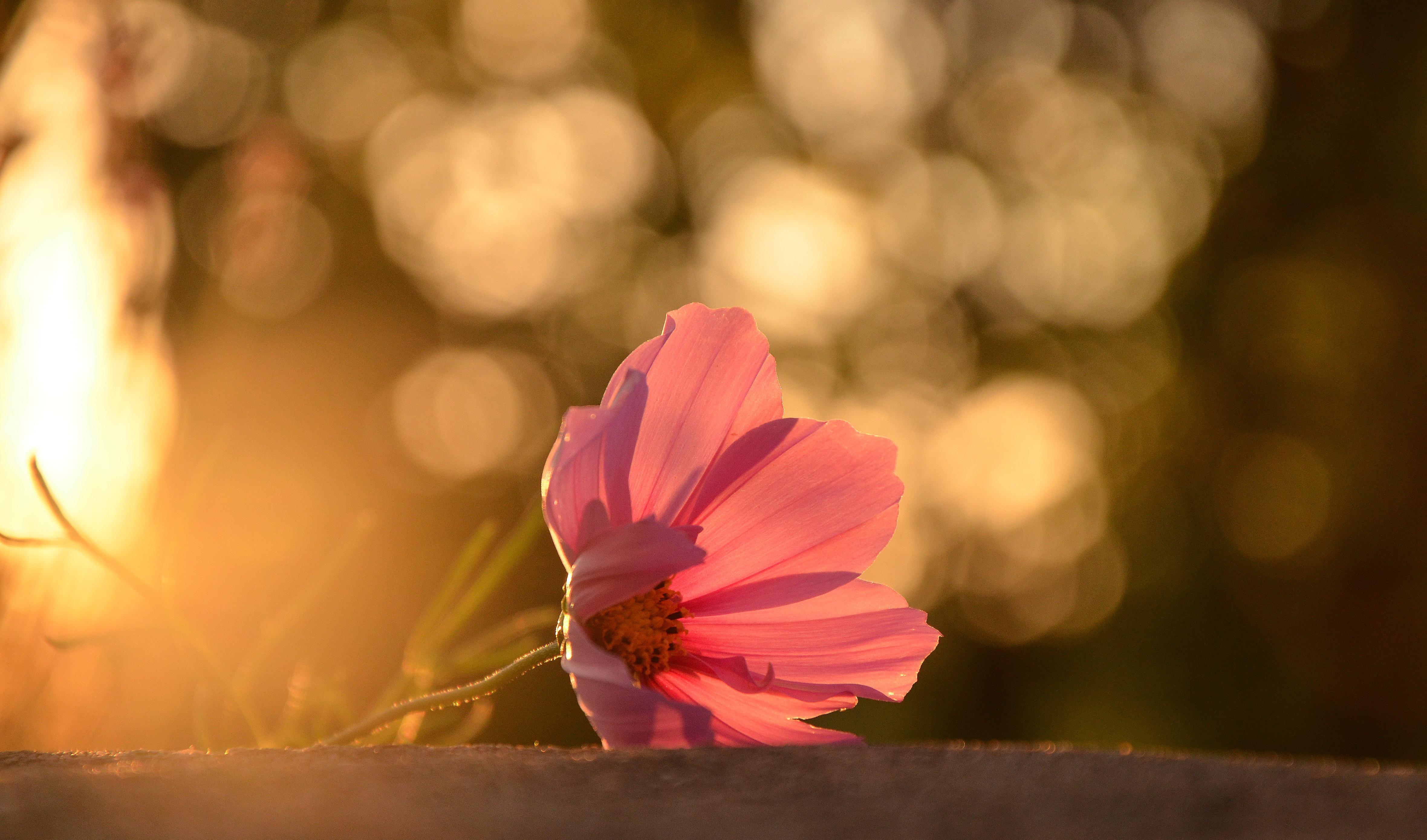 цветы солнце блики  № 1247168  скачать
