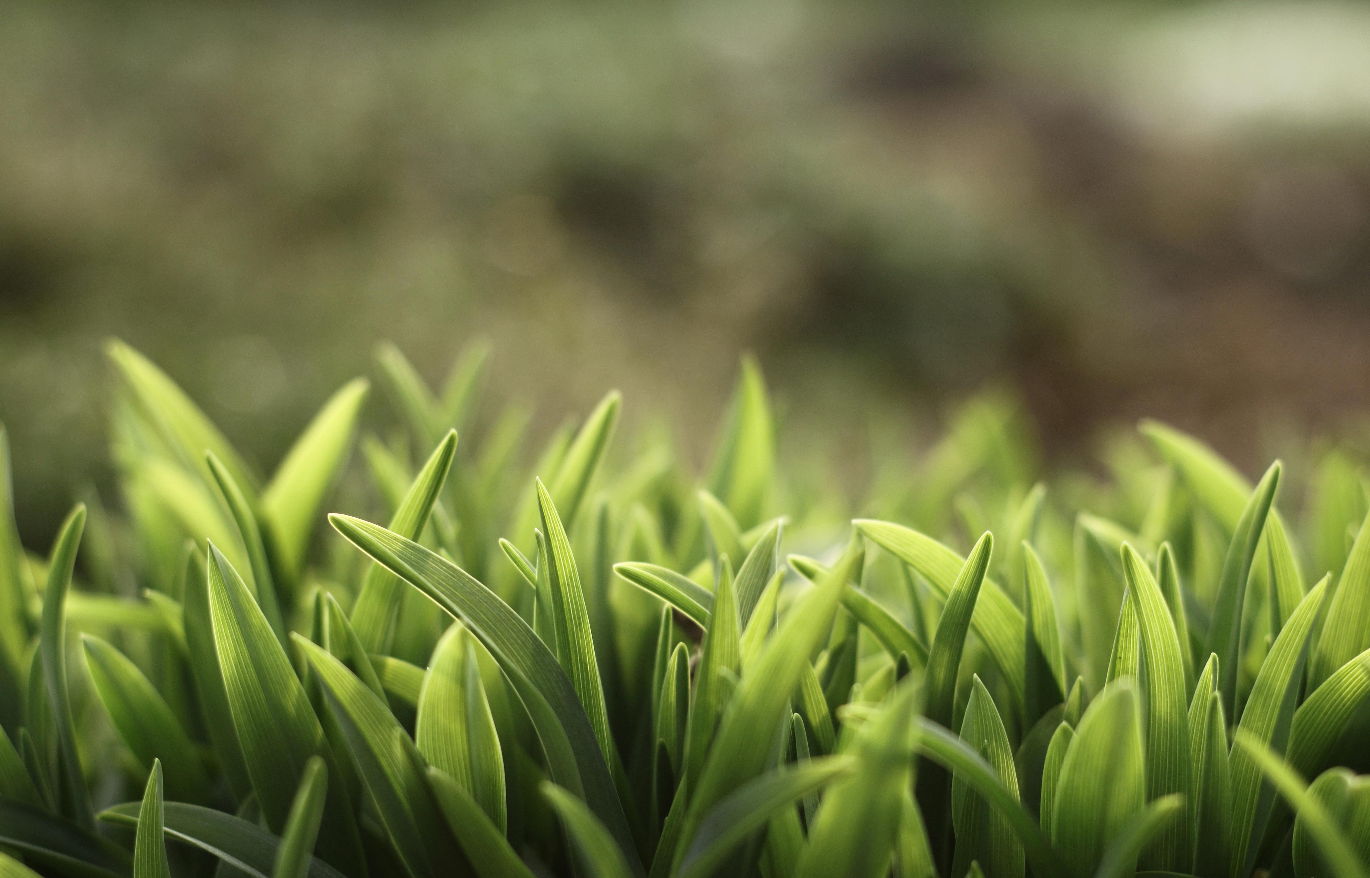 green grass background - HD1920×1080