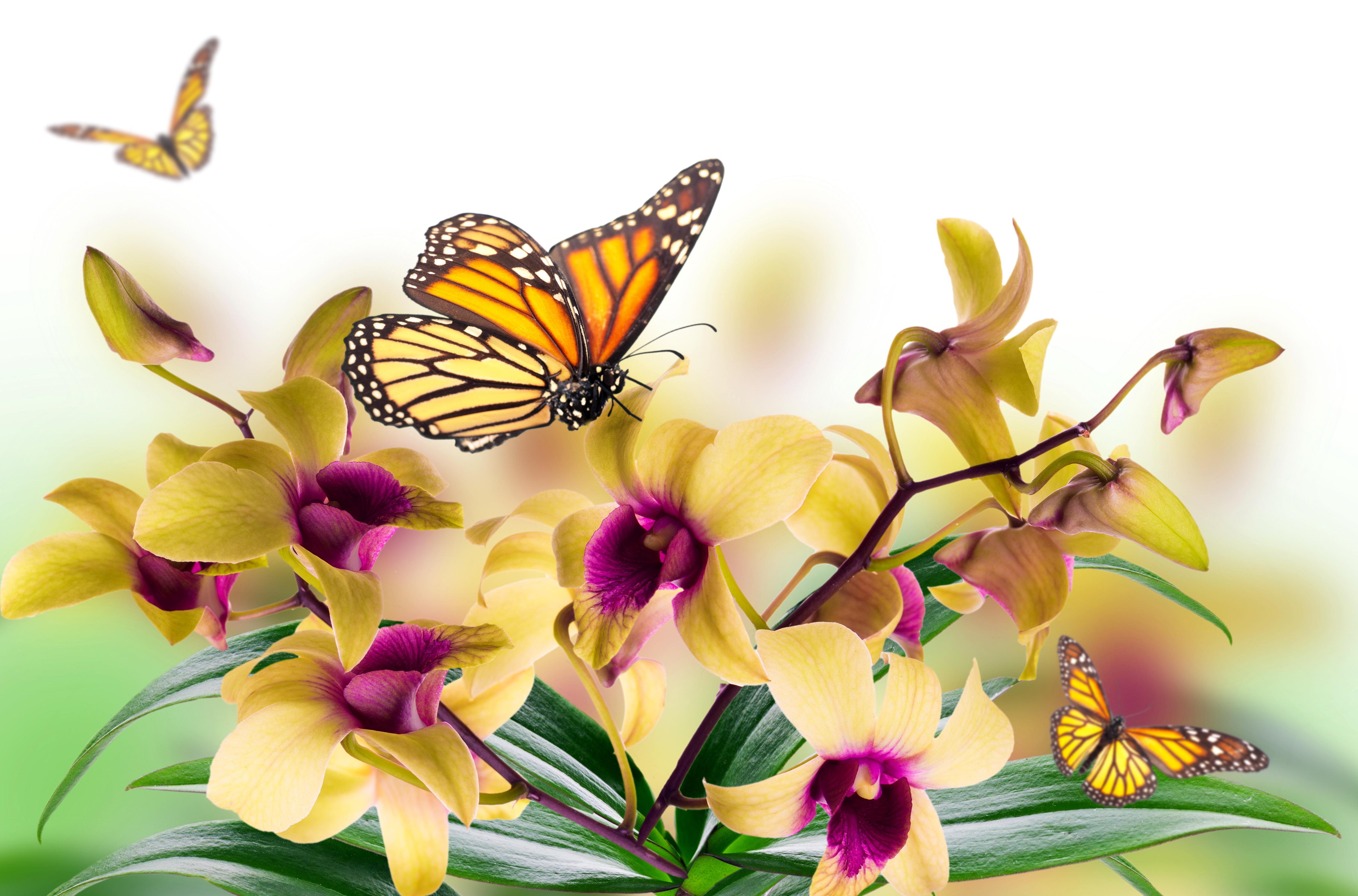 цветы,желтые,бабочка  № 664918 без смс